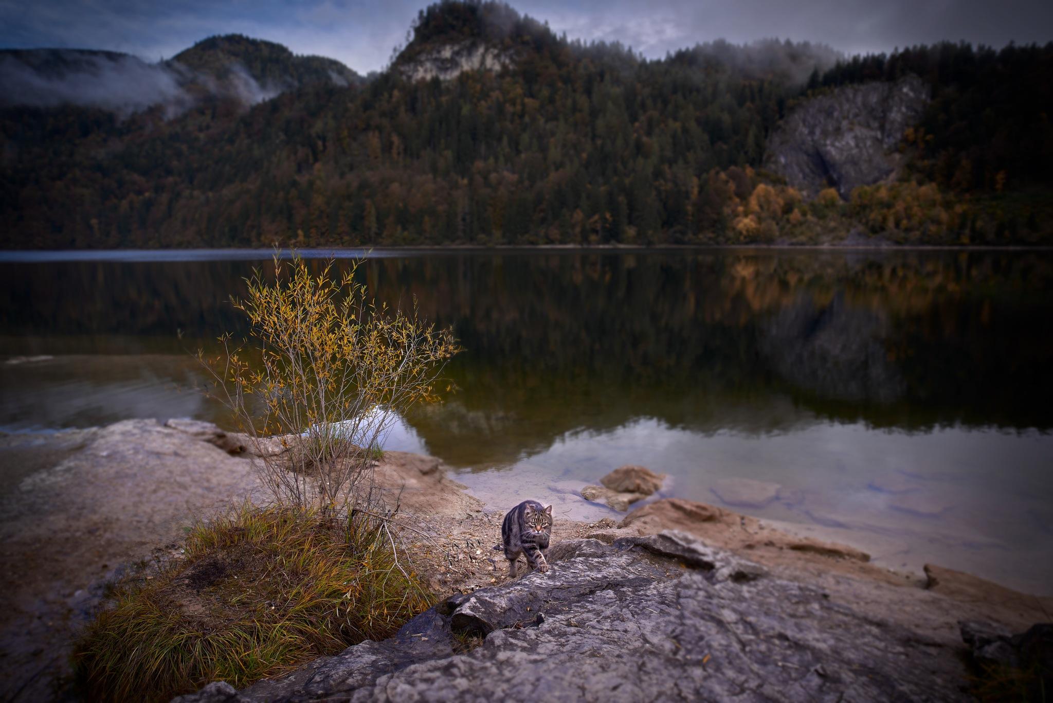 Mountain Cat by Fred Kottan