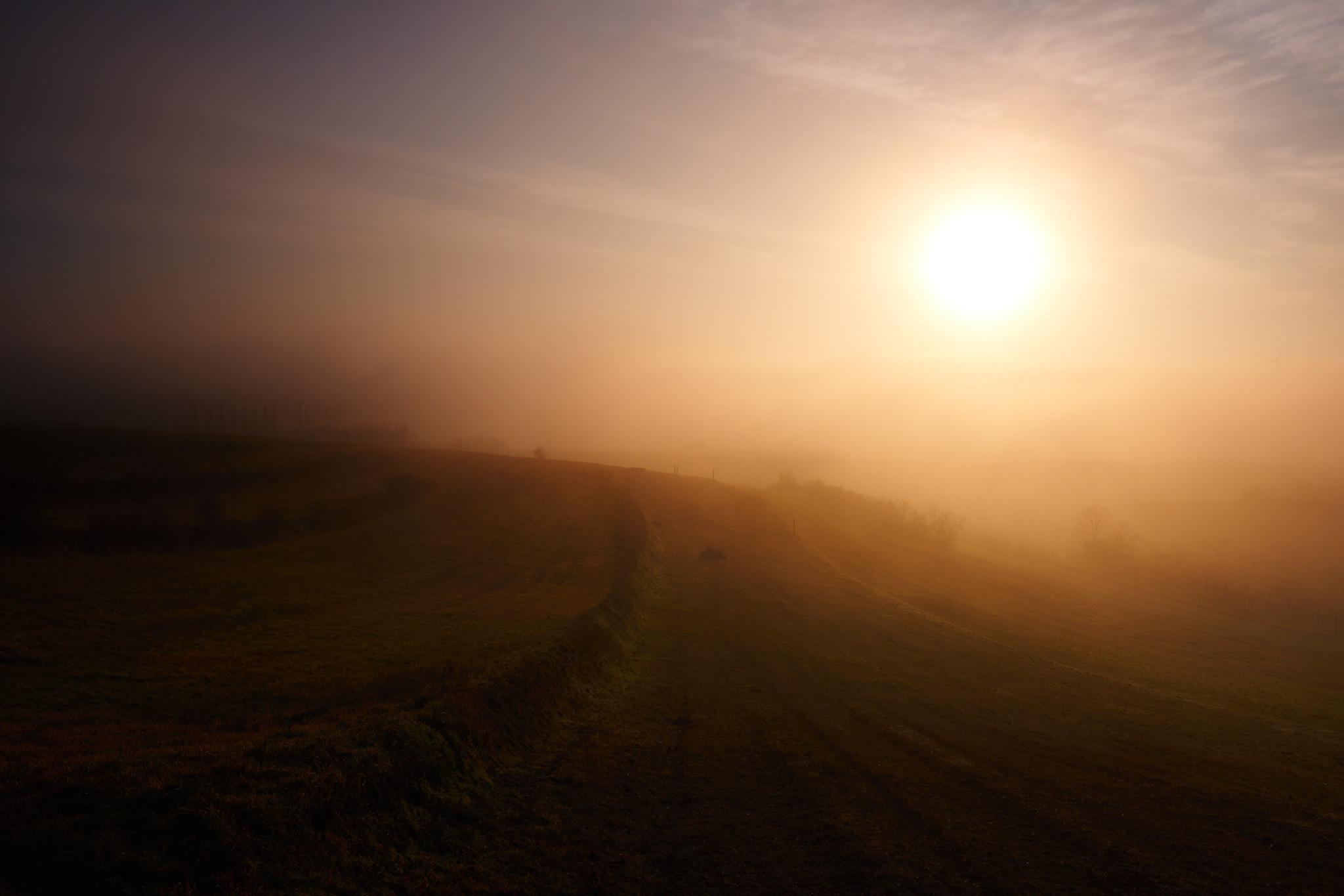 Sun Terrace by Fred Kottan