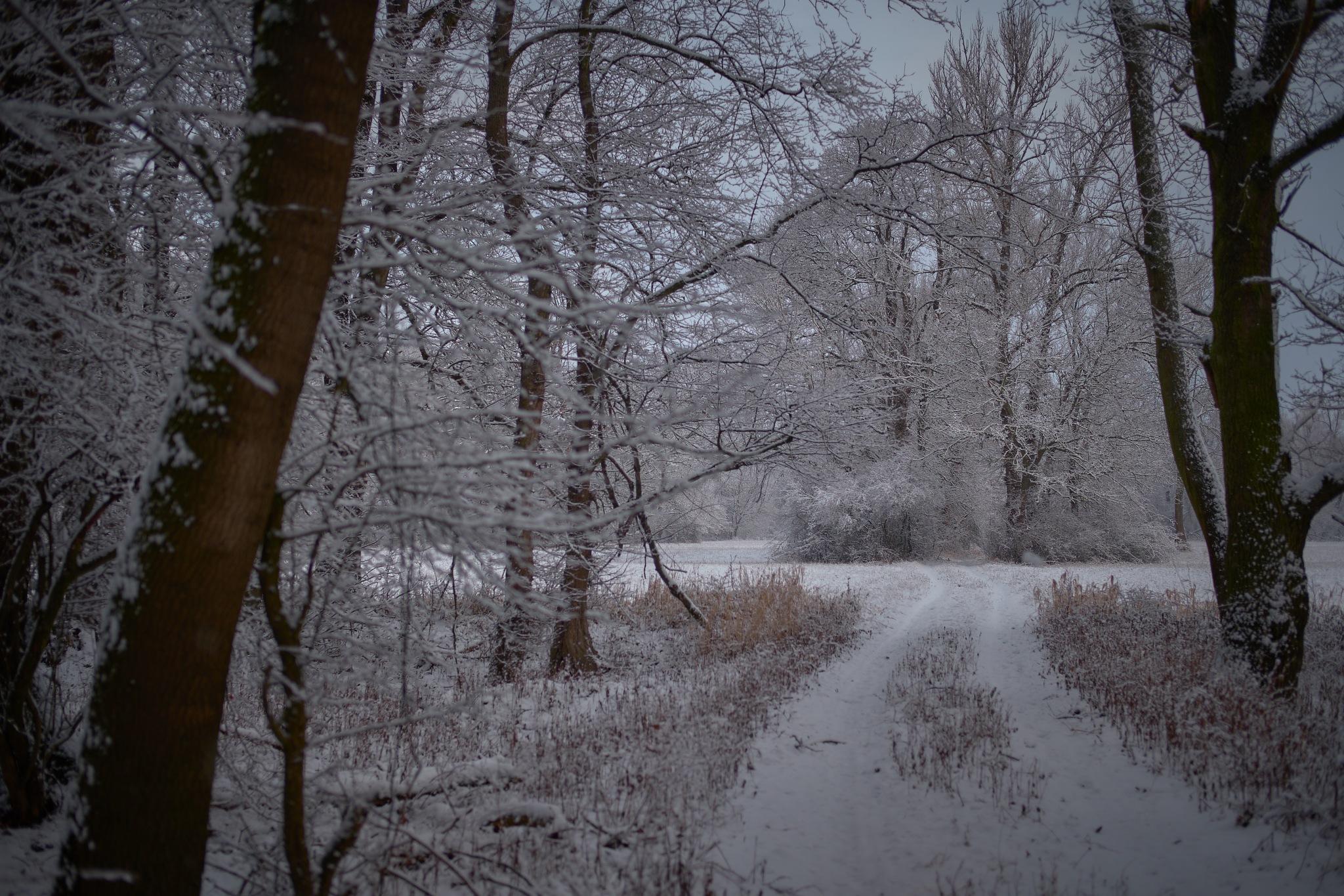 Final Winter Sale by Fred Kottan