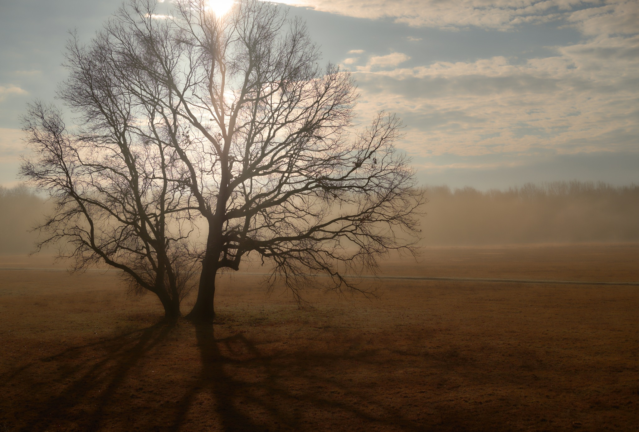 A Tree by Fred Kottan