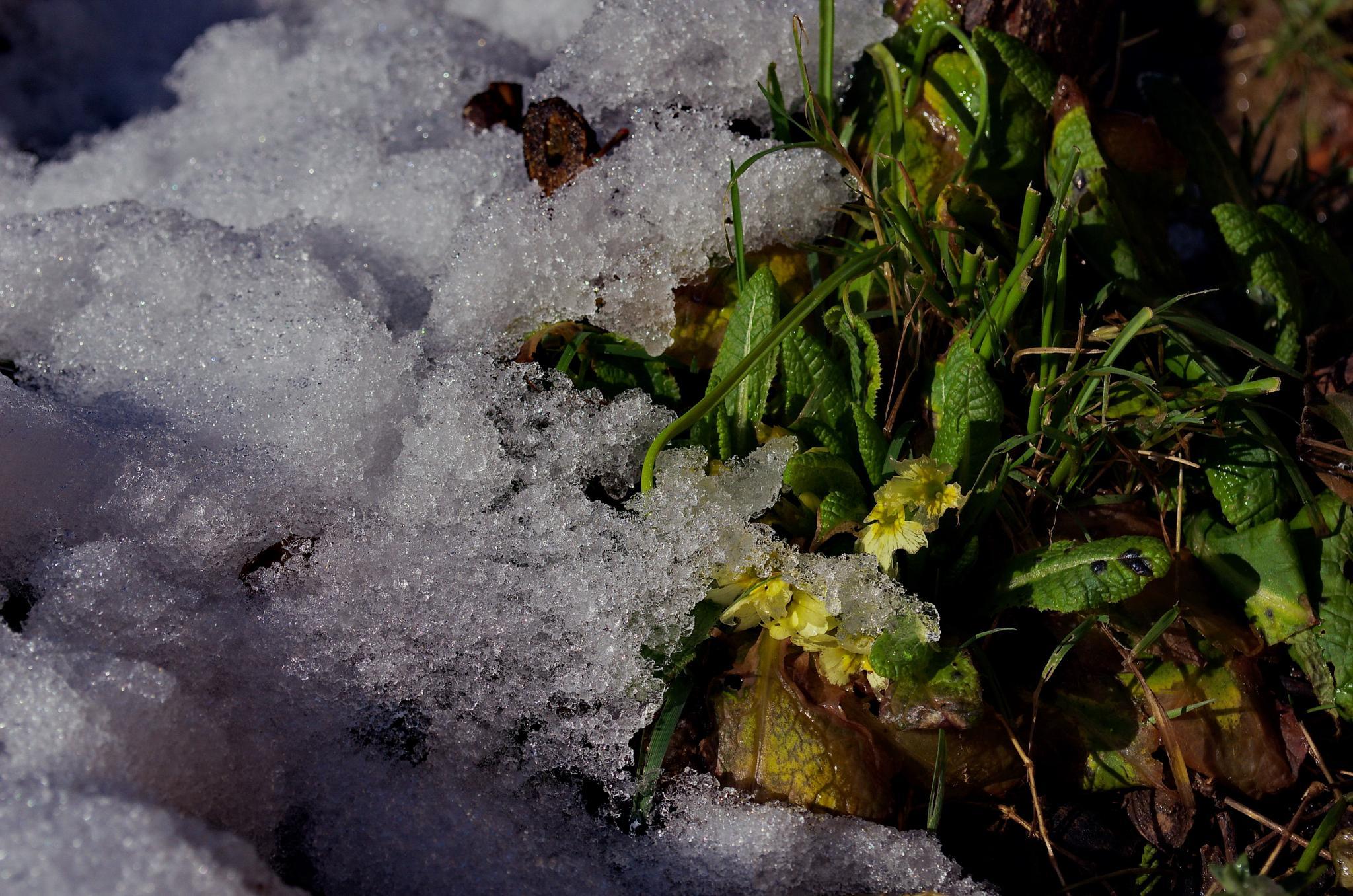 ispod snijega by Zdravko Sudac