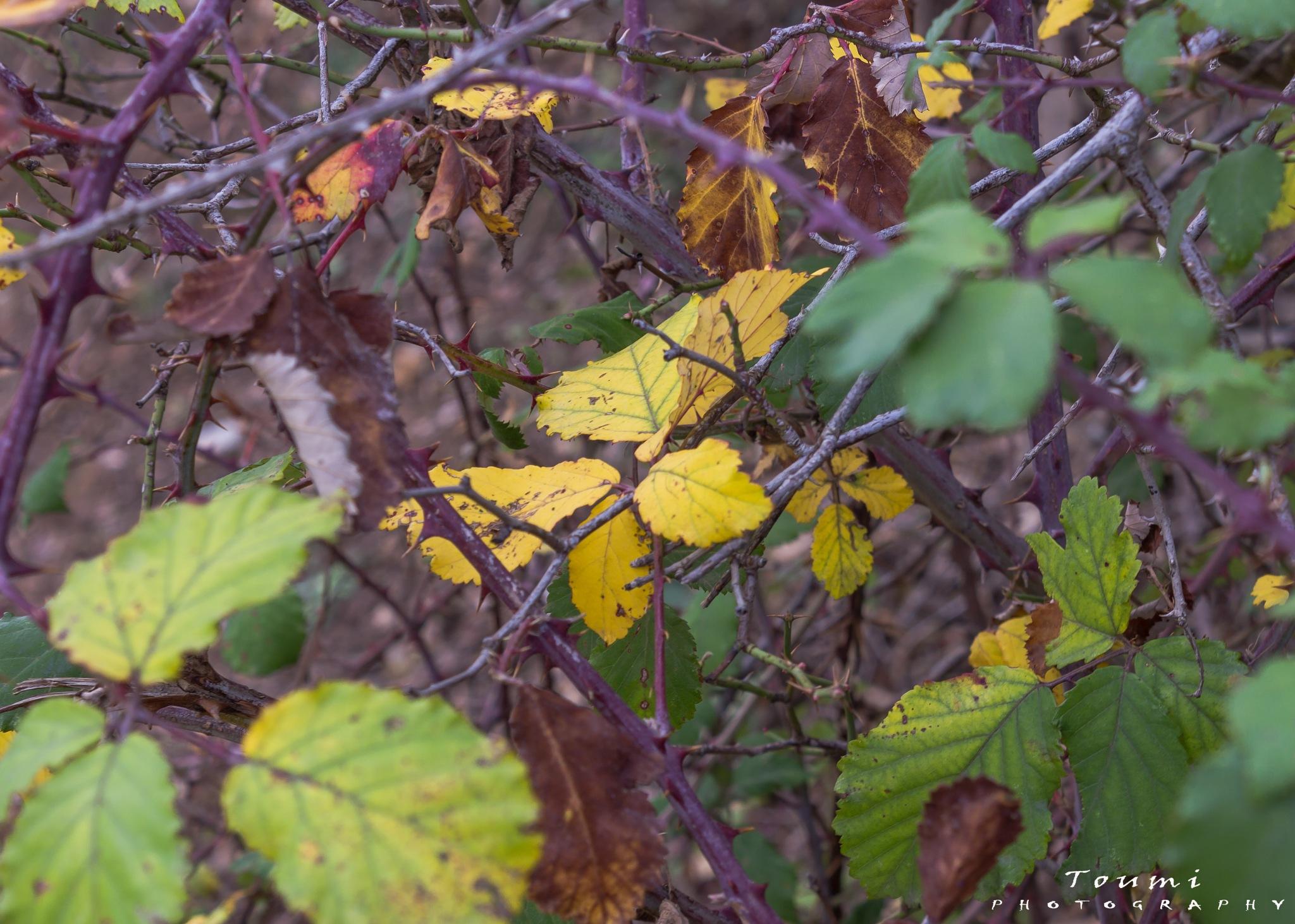 Yelllow Leaf by Toumi Bilel