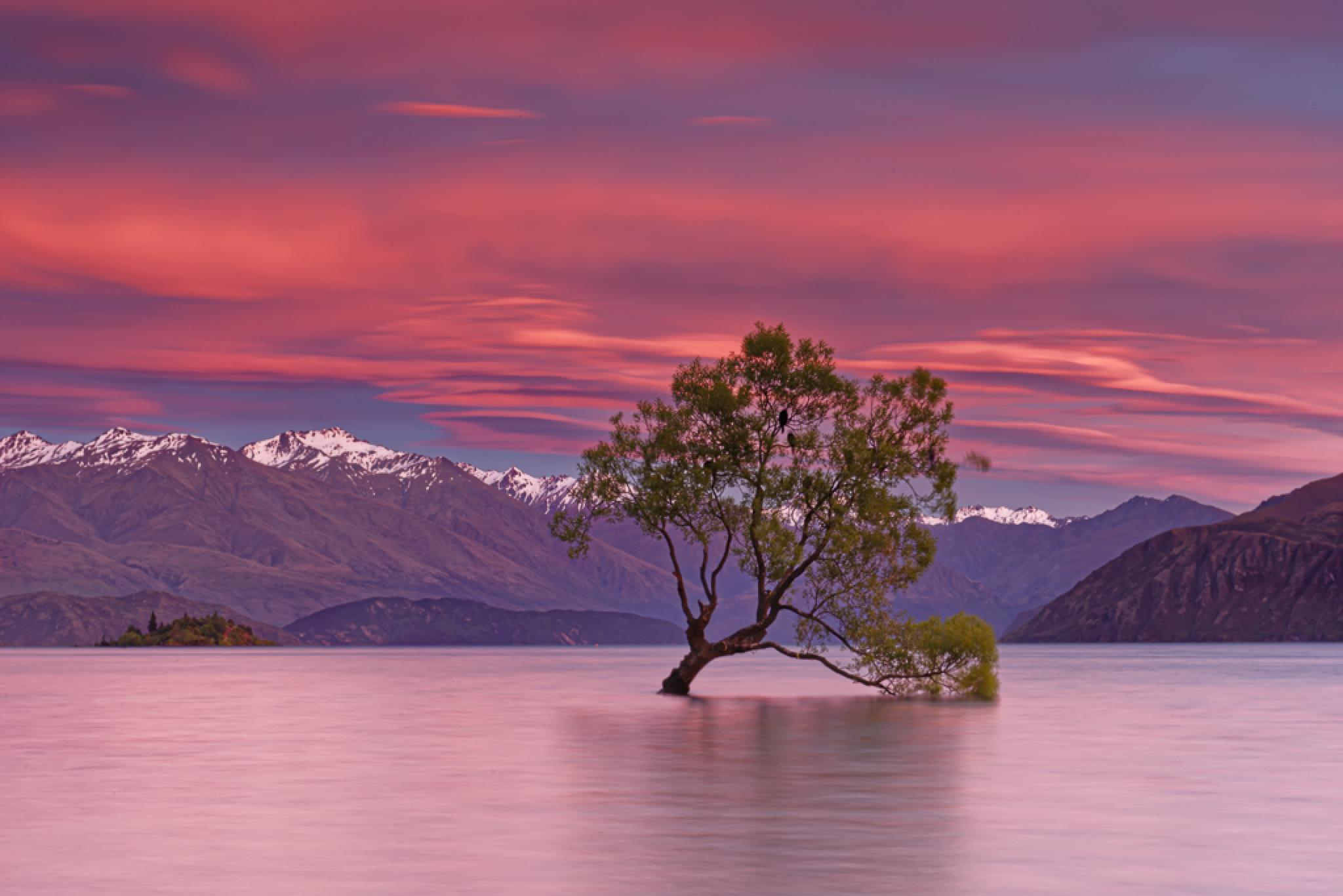 Lonely Tree in lake Wanaka by James Zhen