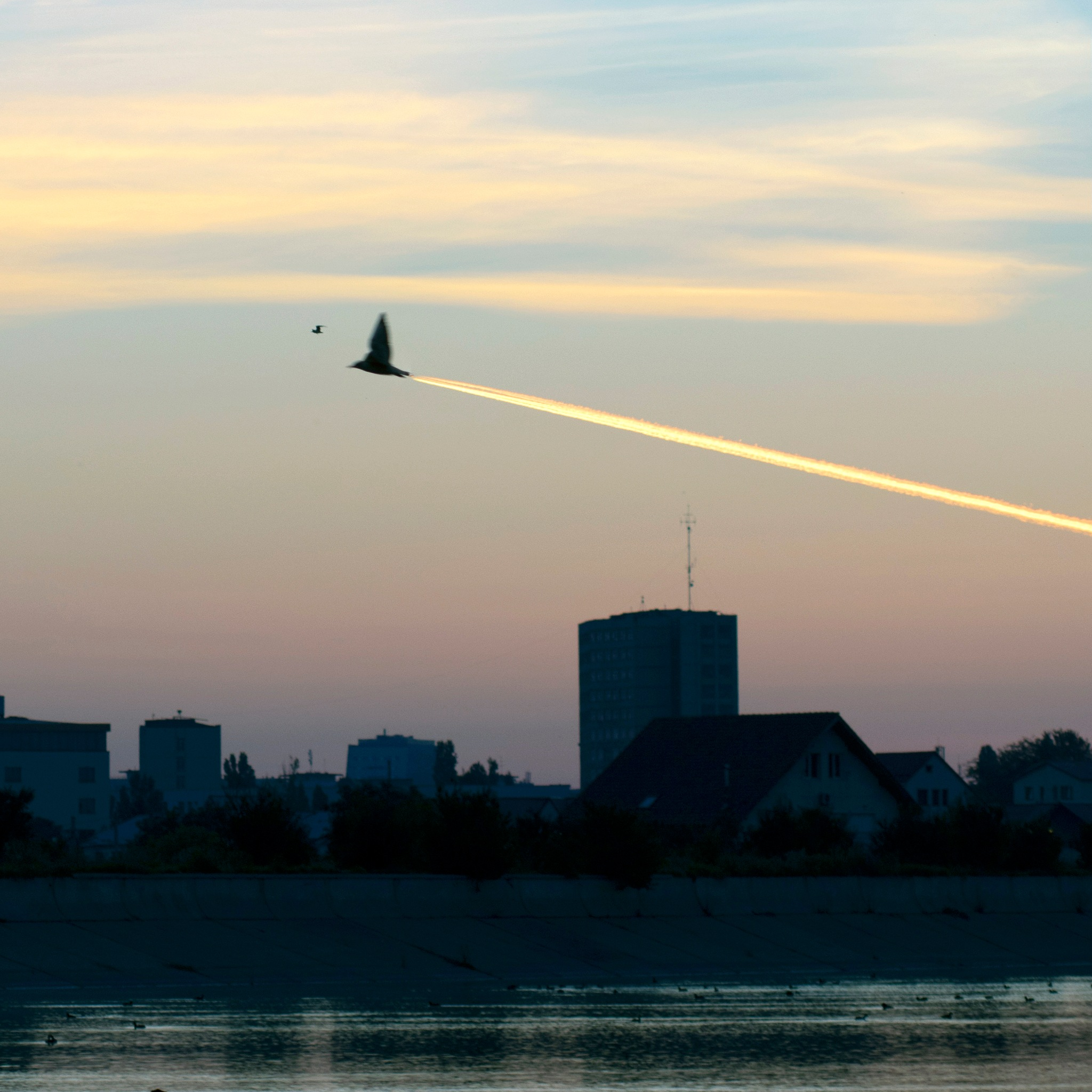 JetBird by Costy Pirvu