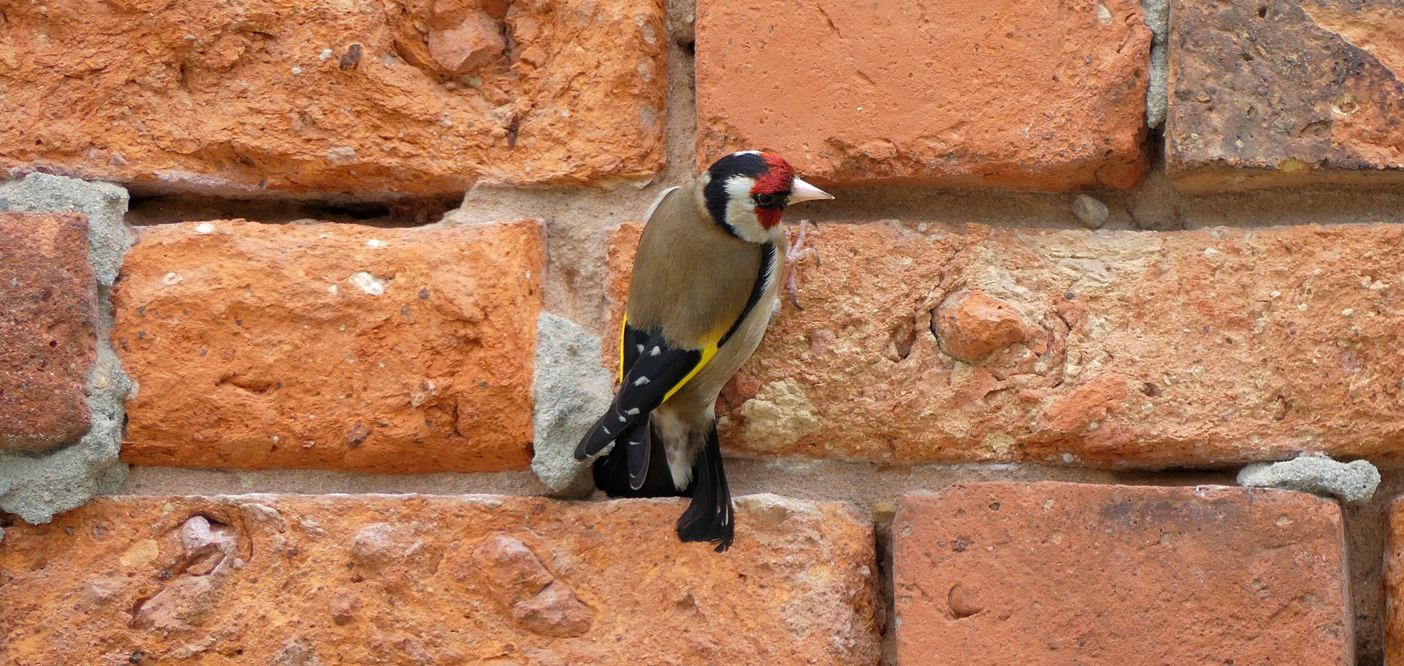Trying to take a picture of a wall. Dickybird ruins it, because that's what dicky birds do. by Lars Verhoeff