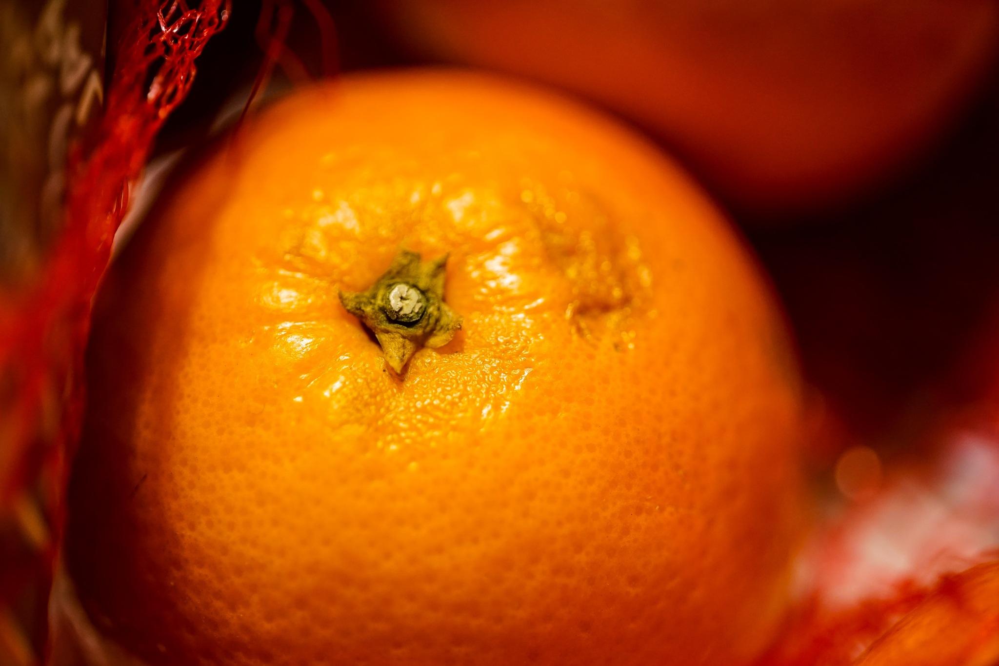 Blood Oranges  by Scott Davies