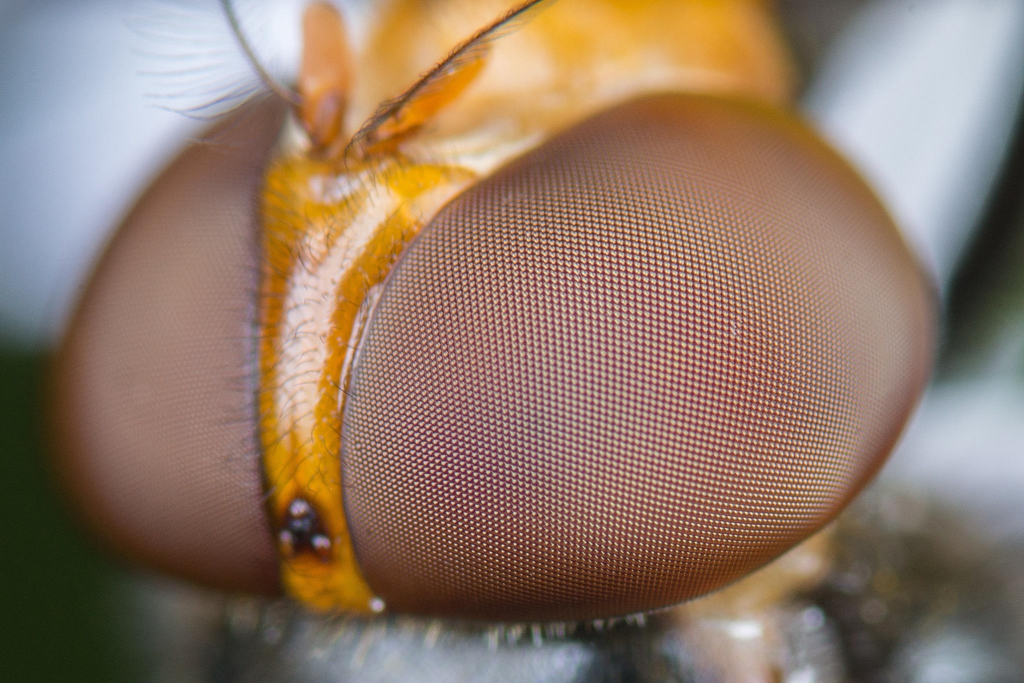 fly by Kurt Hohenbichler