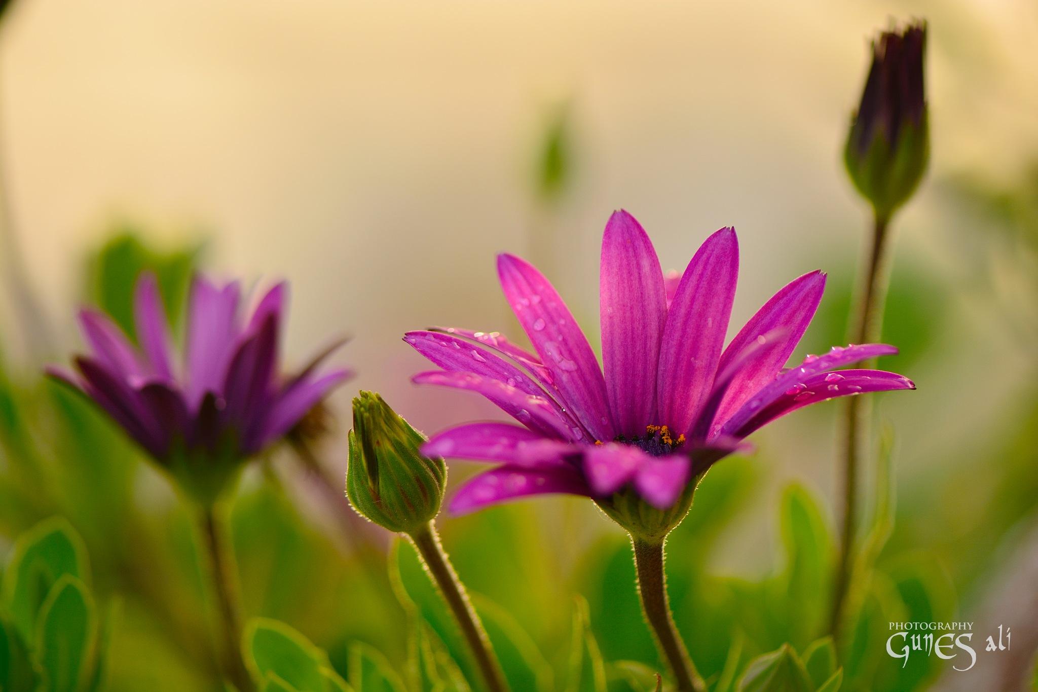 bahar çiçekleri by gunesali.photography