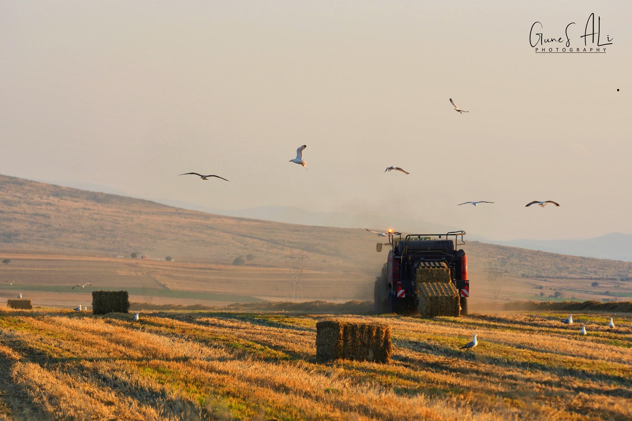 saman balya hasadı by gunesali.photography