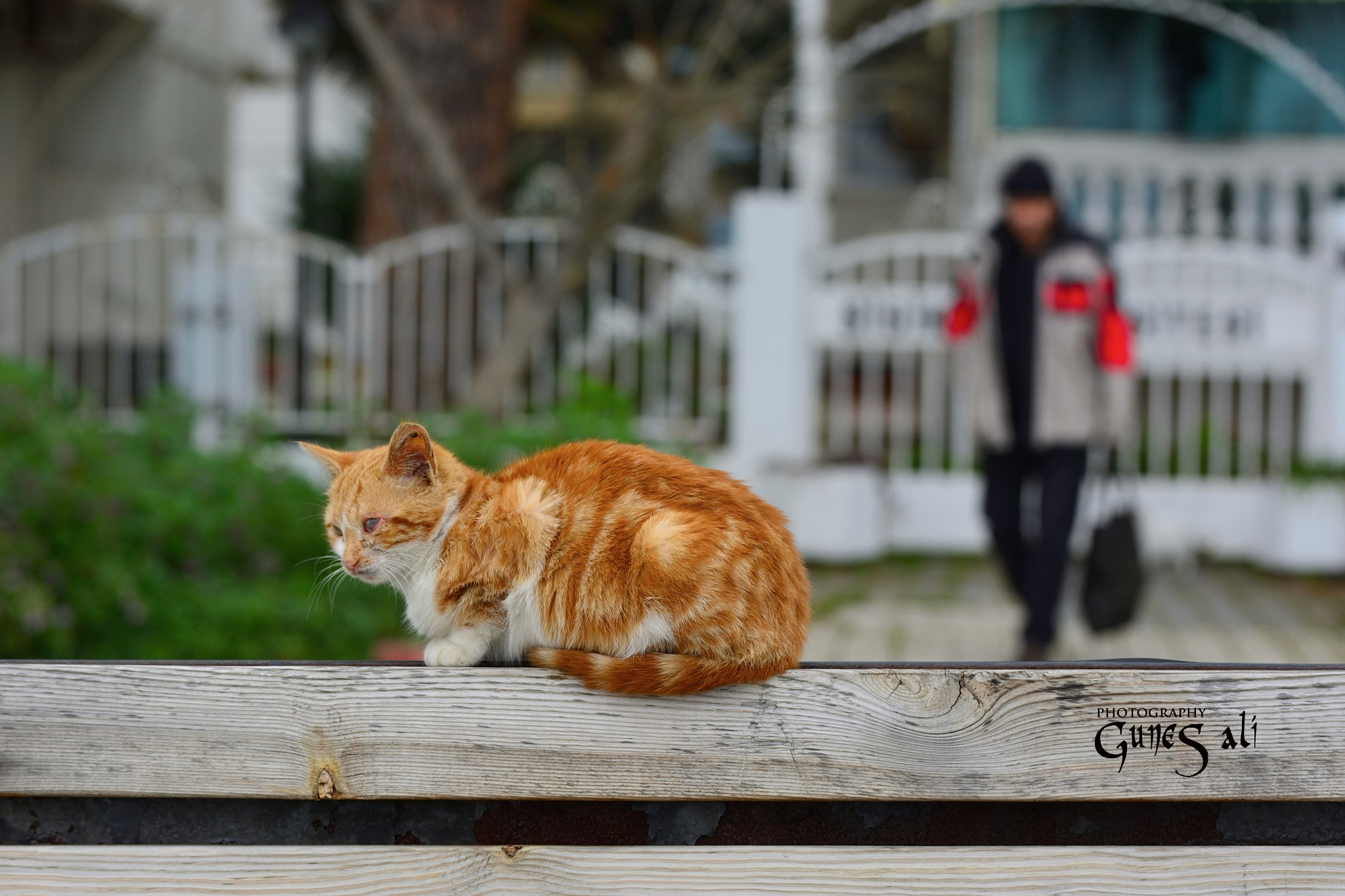 sarı kedi by gunesali.photography