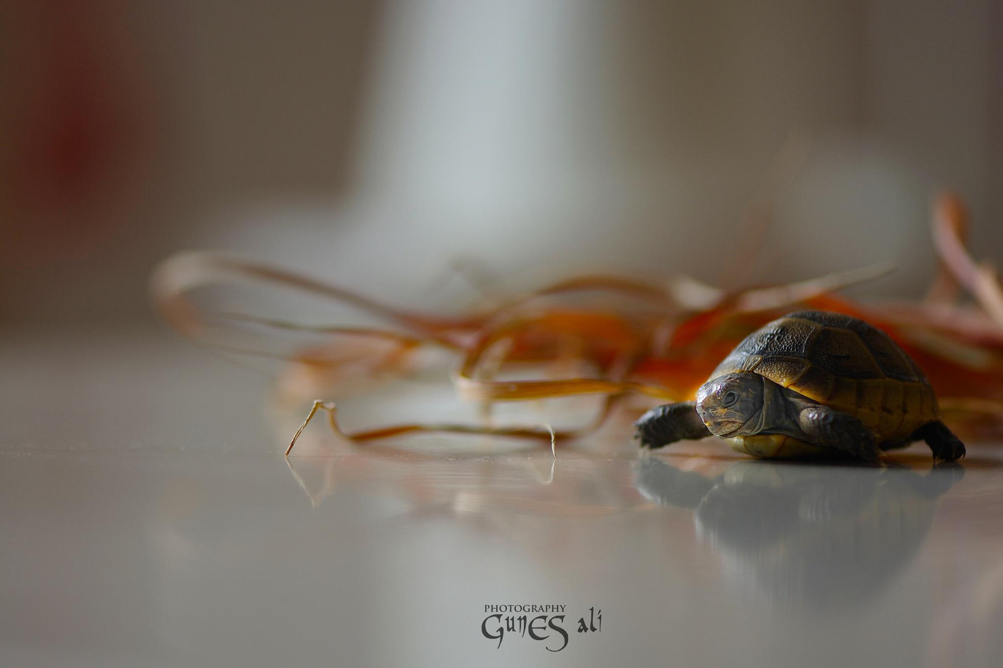 kapluş by gunesali.photography