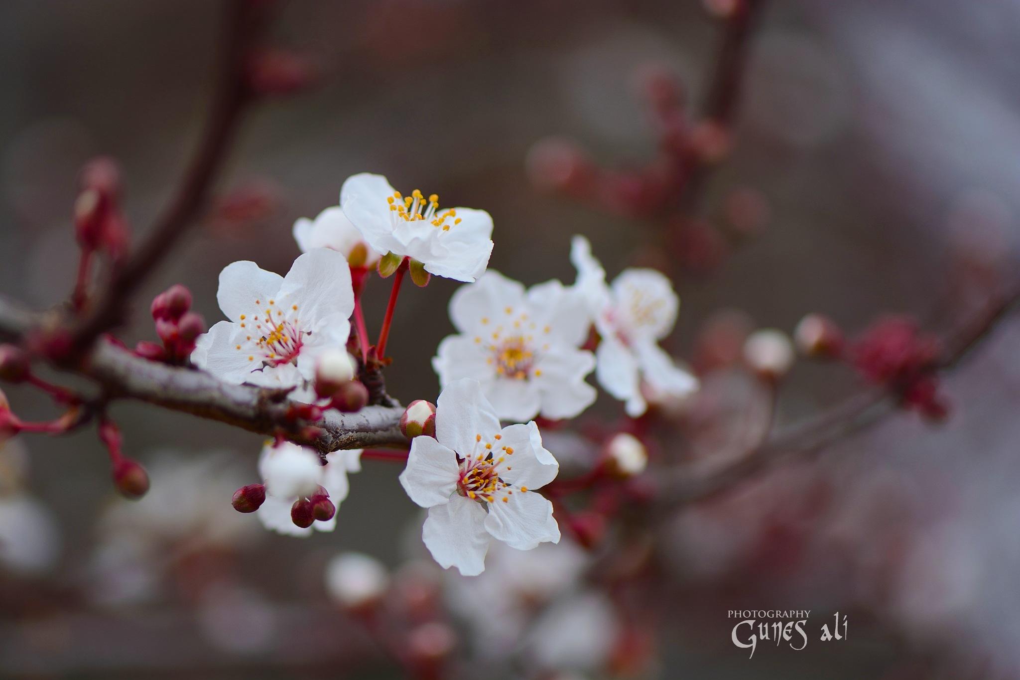 bahar by gunesali.photography