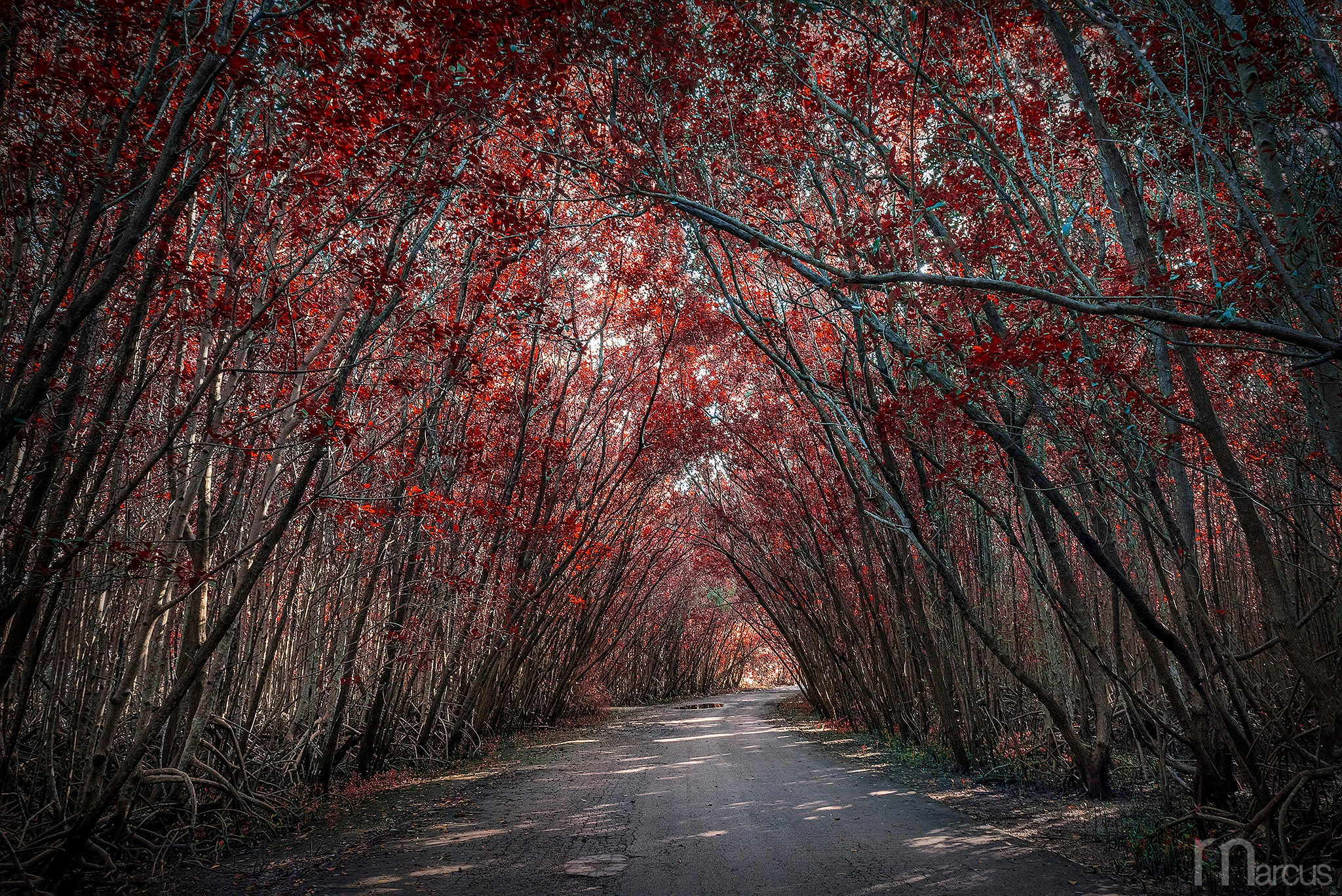 Covered Path by Richard Marcus
