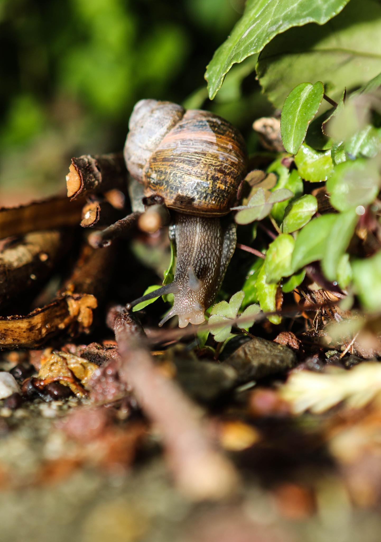 Photo in Macro #snail #garden #nature
