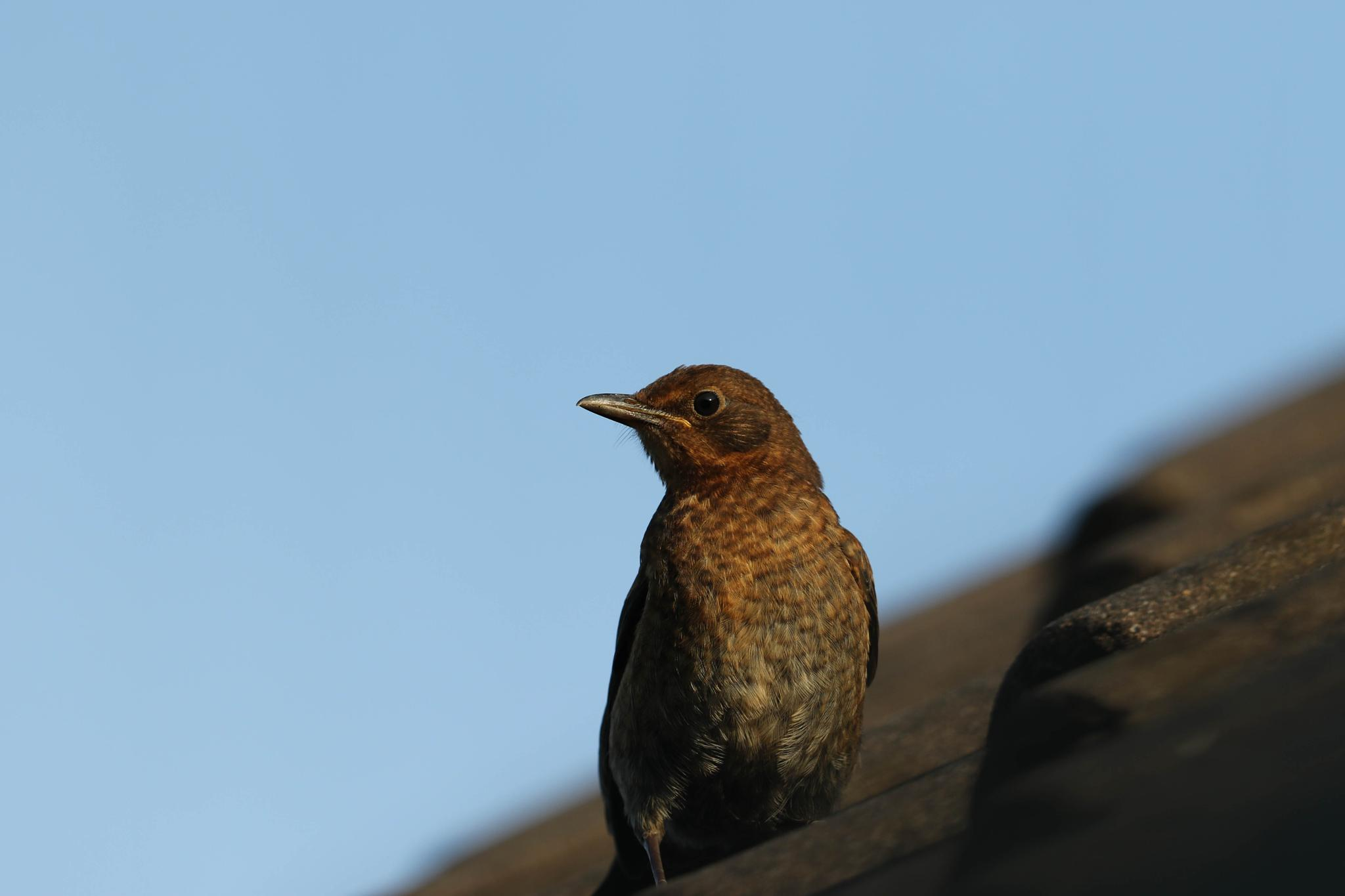 bird by emmanuel liegeois