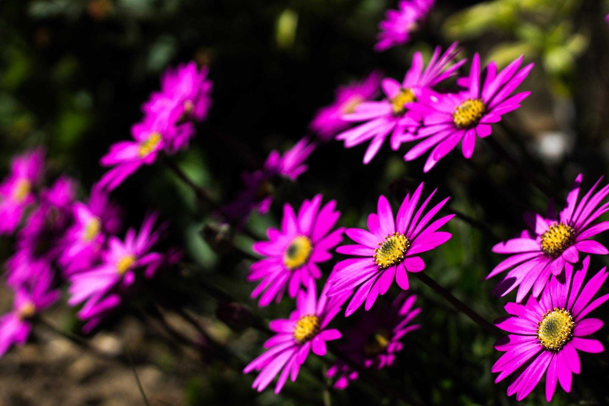 Flowers by Piotr Krzeminski