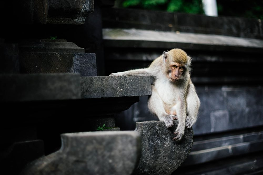 My Spiritual Animal by Fady Wagih