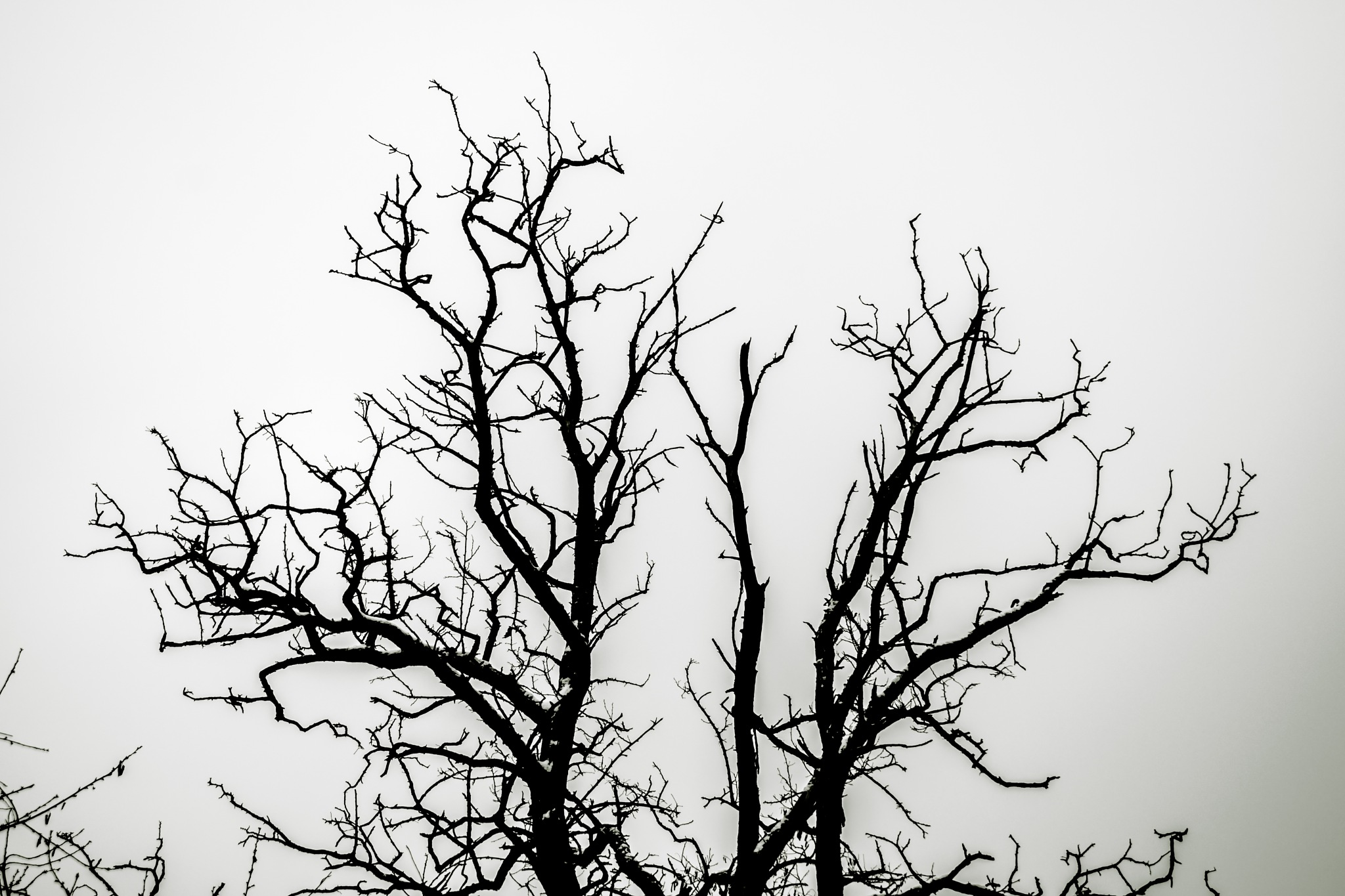 dark by Ciprian Bernic