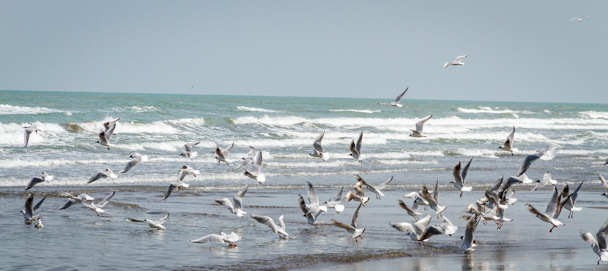 free as a bird by AminDogoonchi