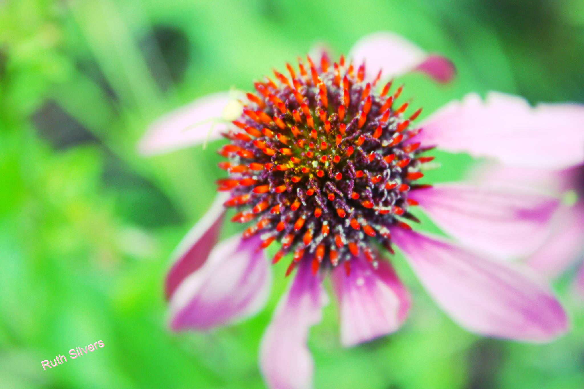 Depth of field by Ruth Silvers