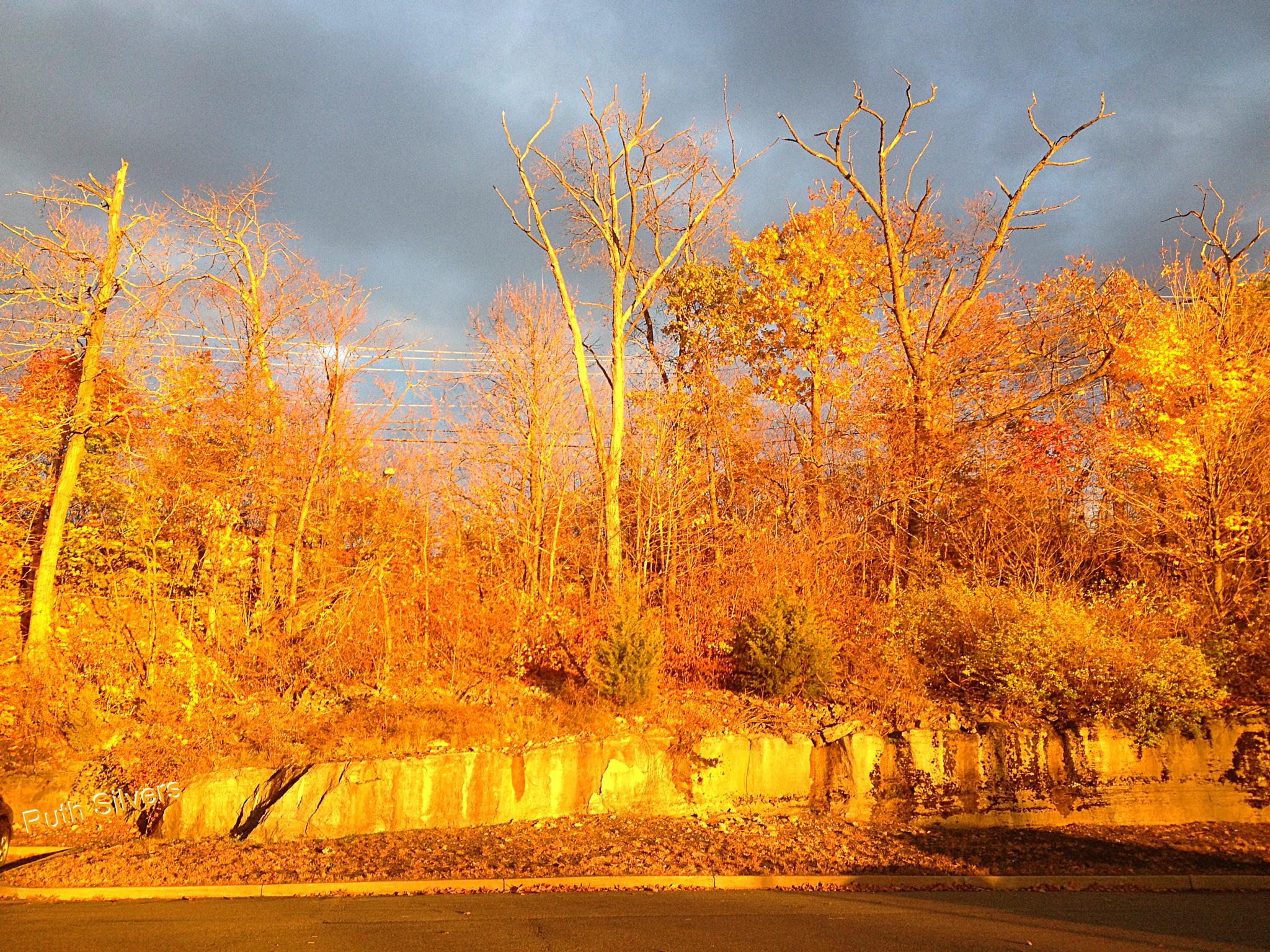 Photo in Cityscape #golden #color #sun #parking lot #light