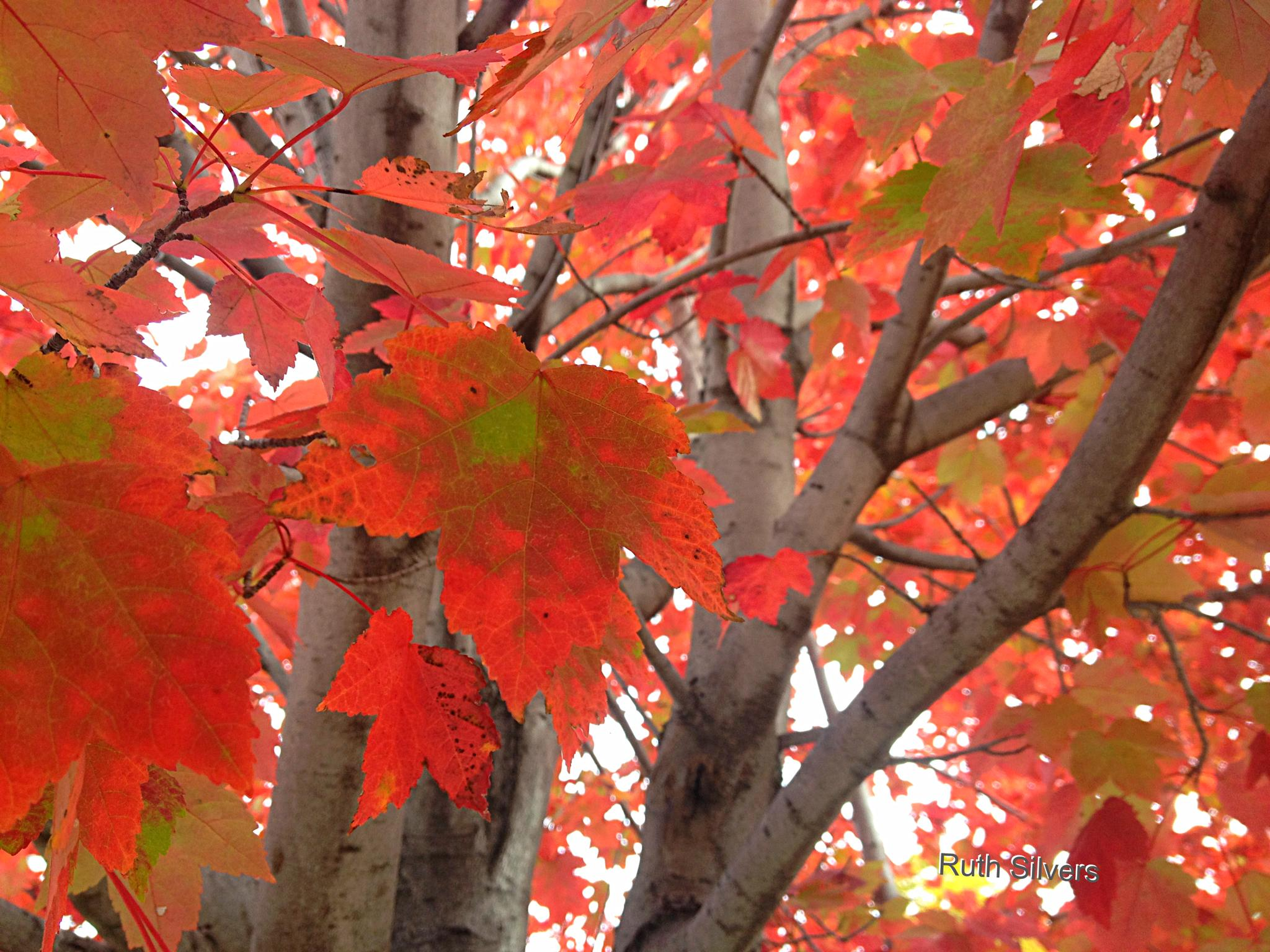 Amazing leaves! by Ruth Silvers