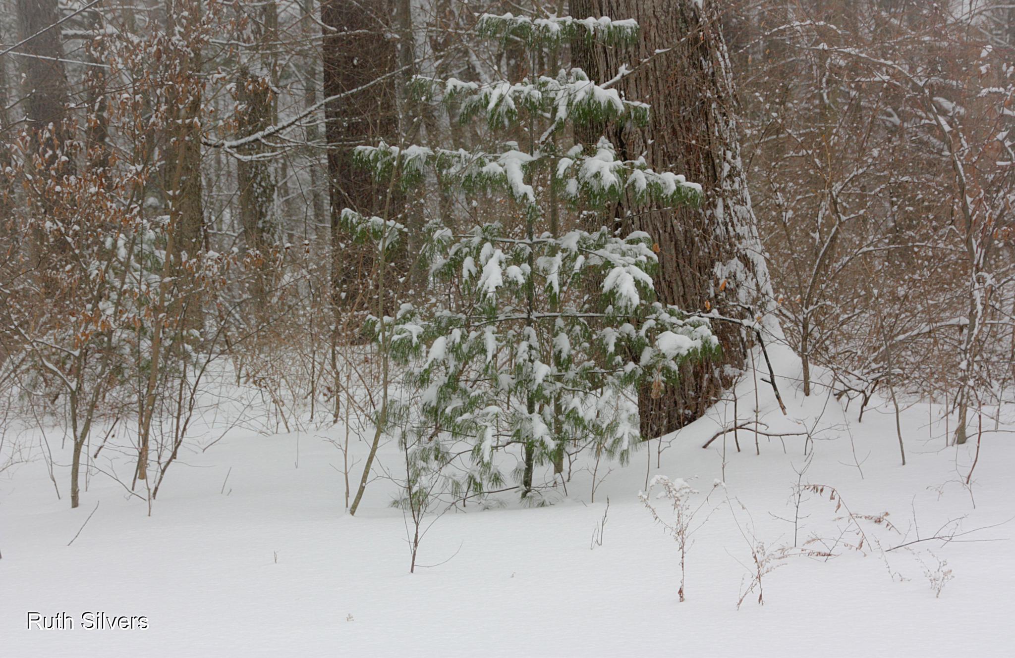 Snow snow snow by Ruth Silvers
