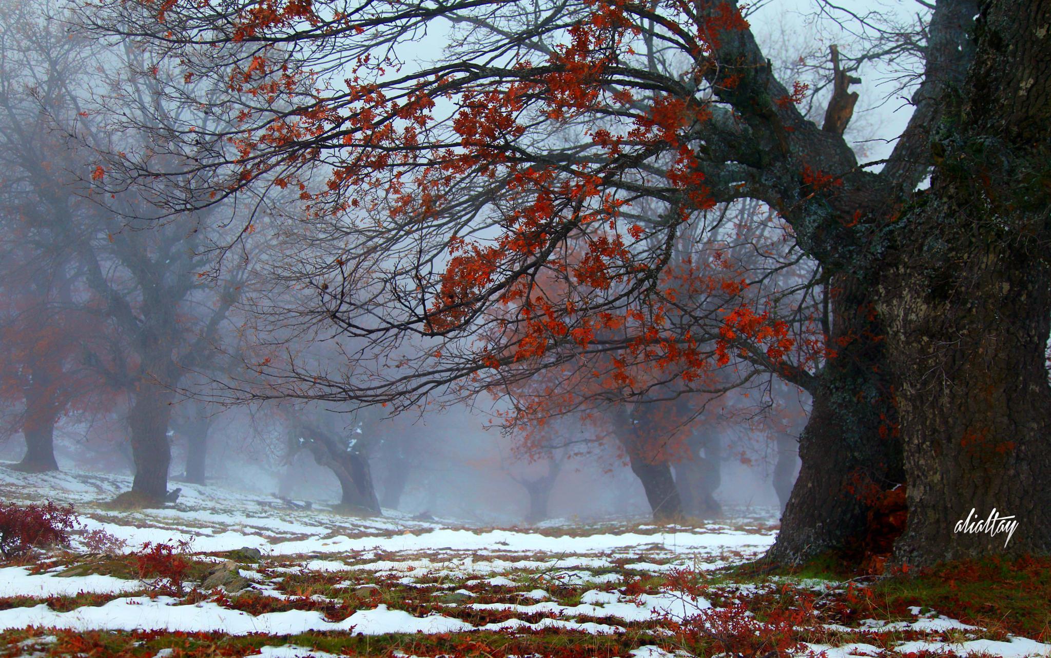 sonbahar ve kar by AliAltay