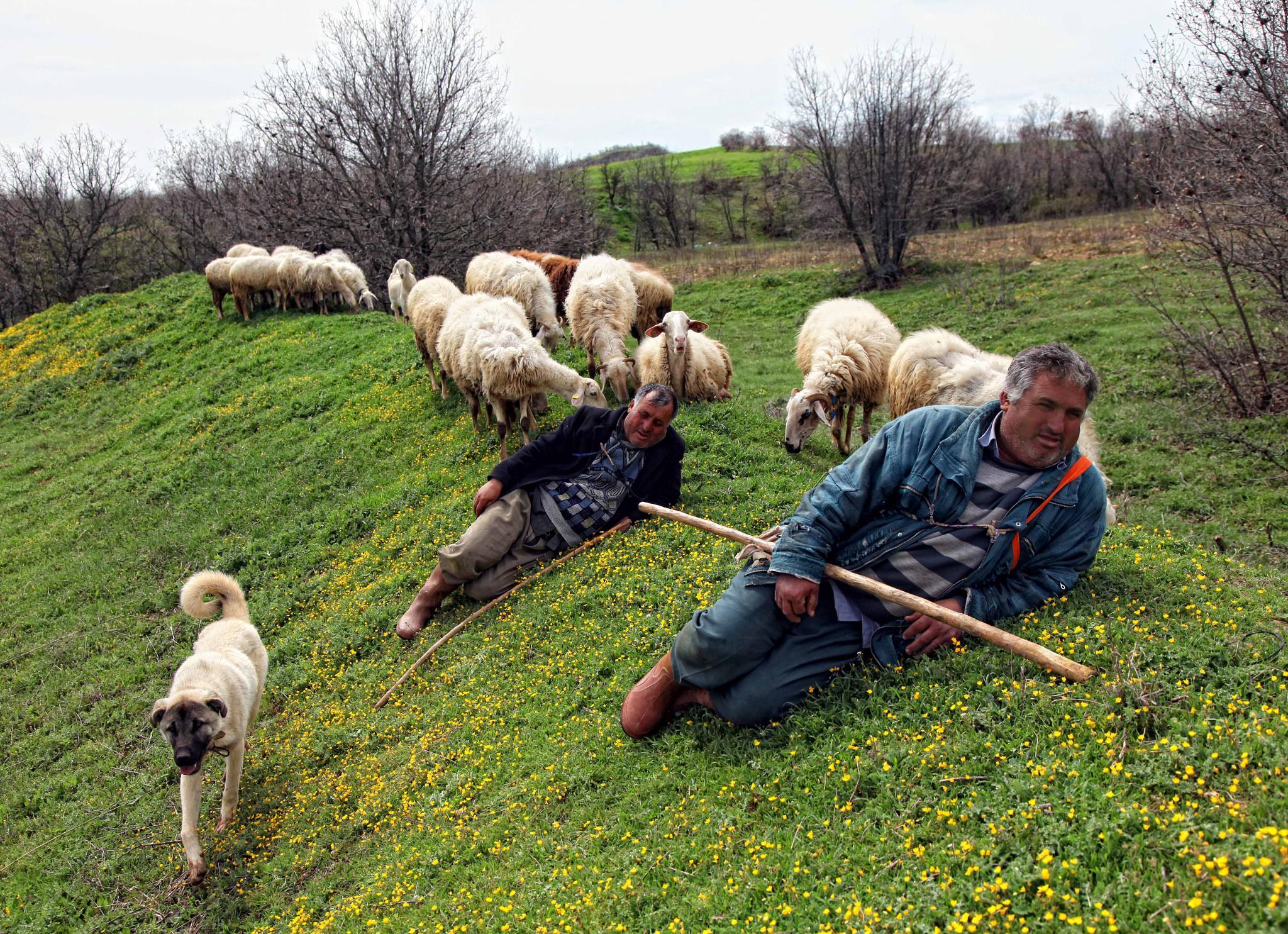 çoban keyfi by AliAltay