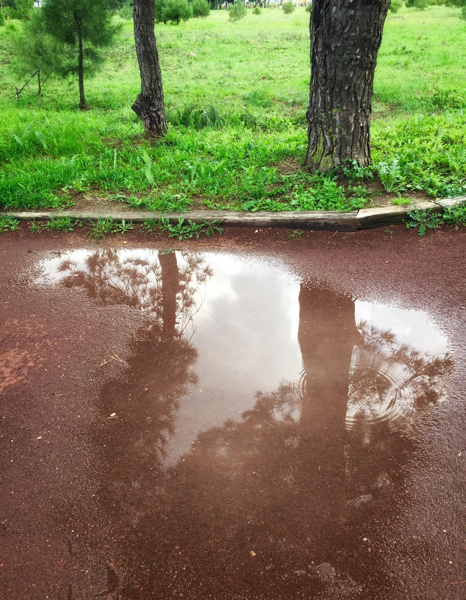Reflections by Deniz