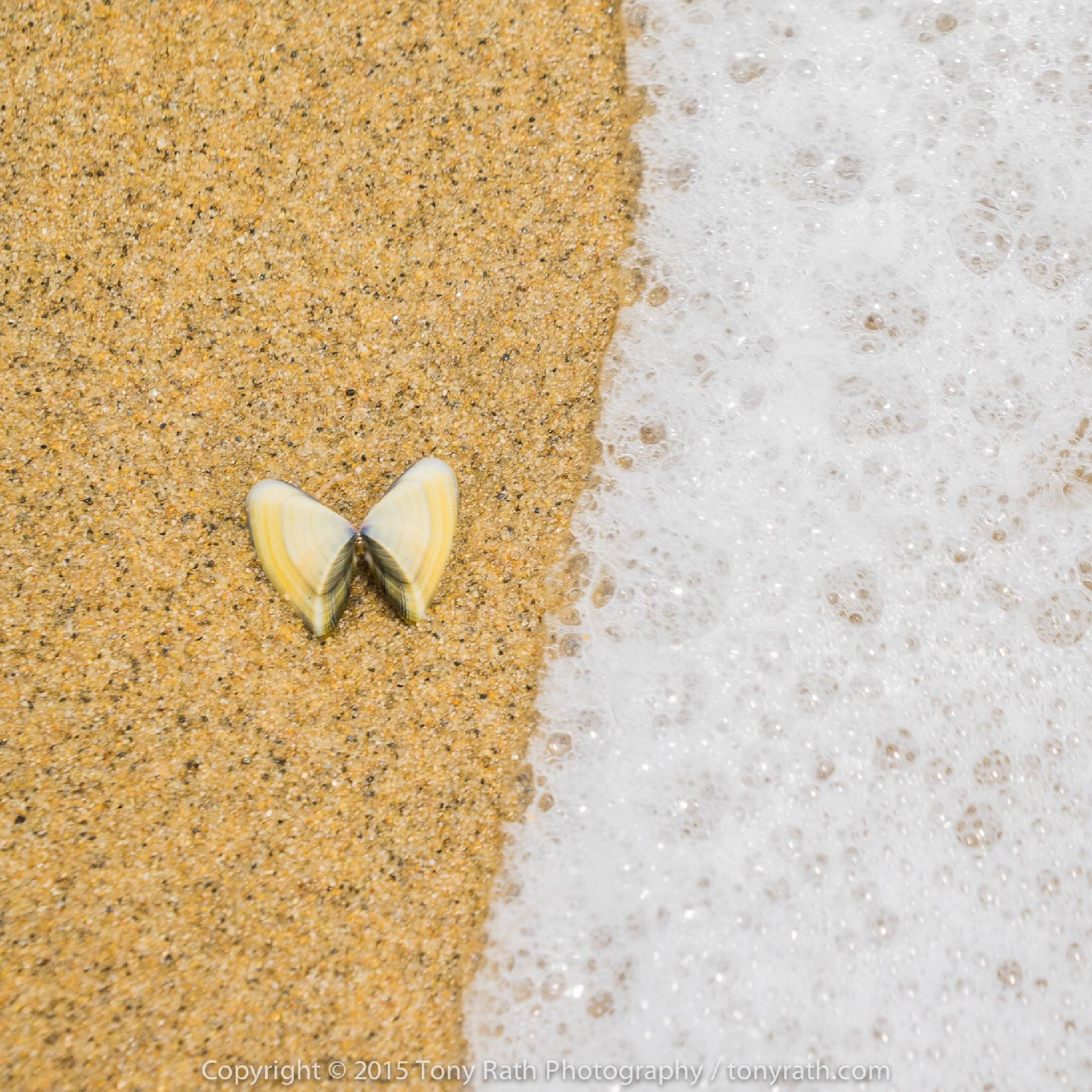 The rare shoreline butterfly by Tony Rath