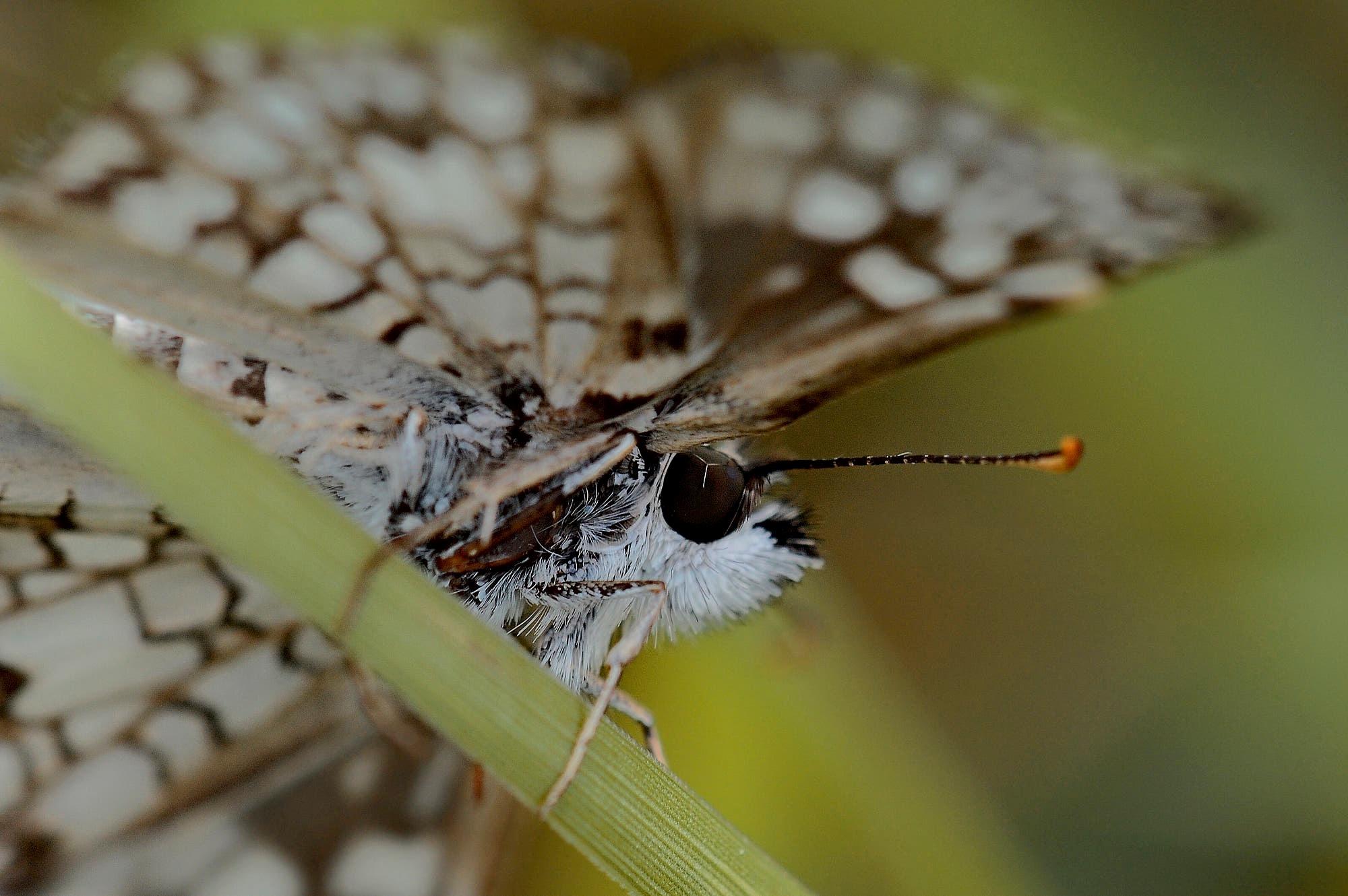 Buterfly in garden by sergiofernandes6767