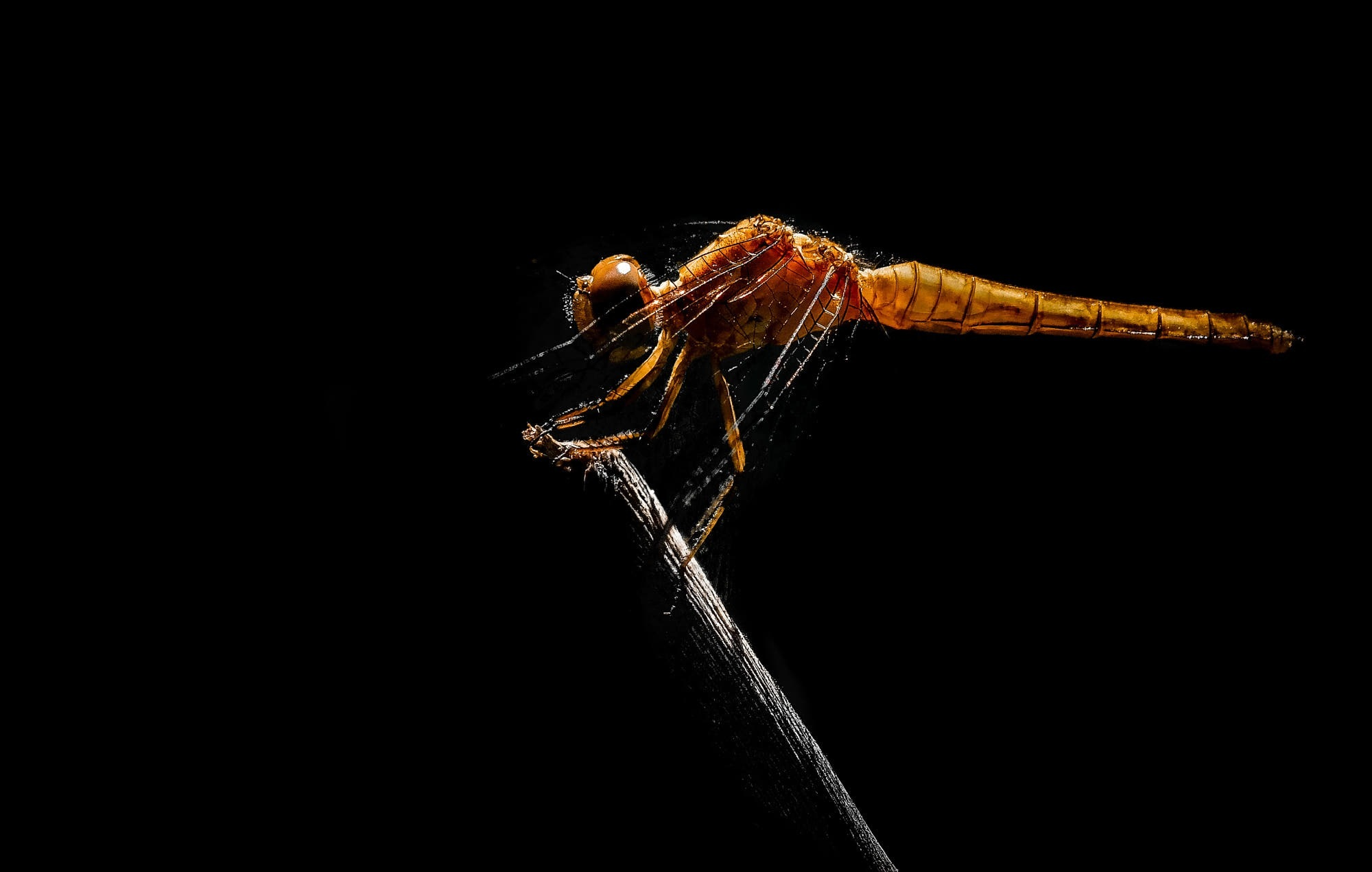 Dragon fly by sergiofernandes6767