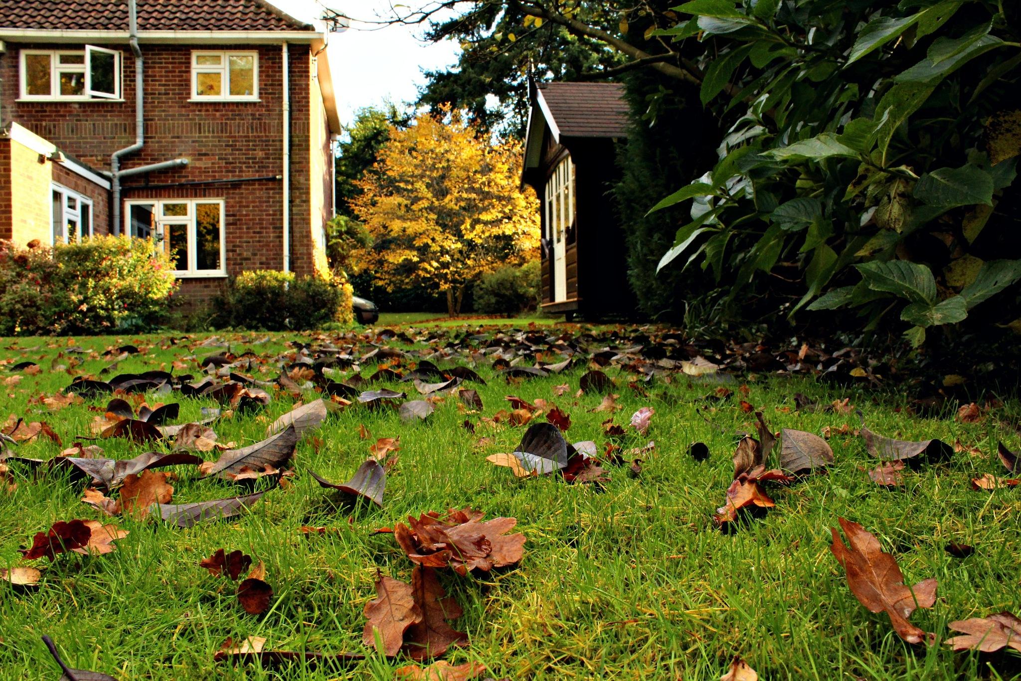 Autumn Floor  by Poppy May Mccollum