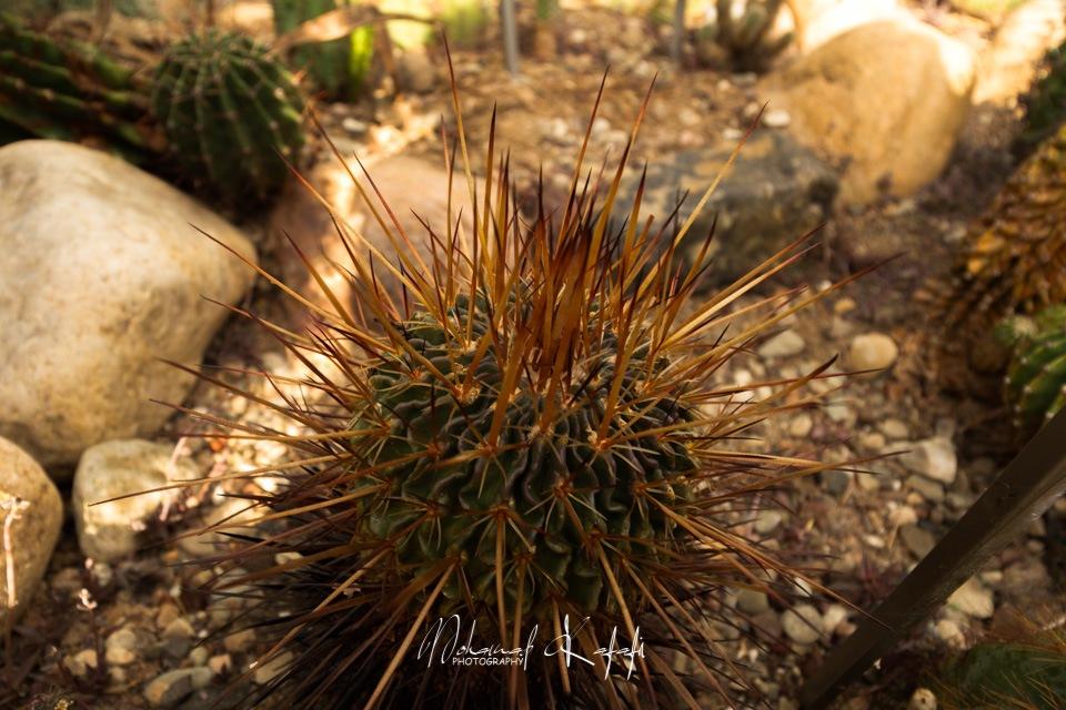 Cactus  by Mohamad Kafafi