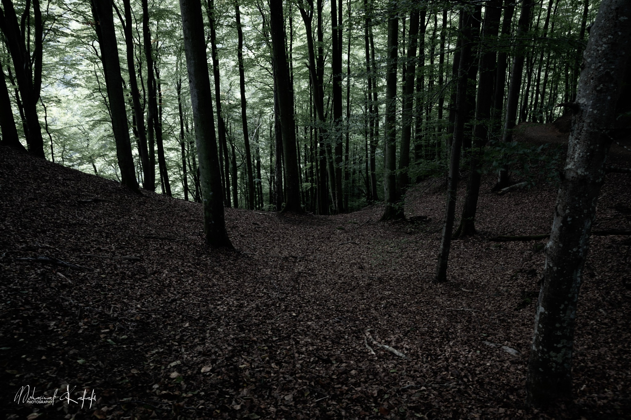 Forest  by Mohamad Kafafi