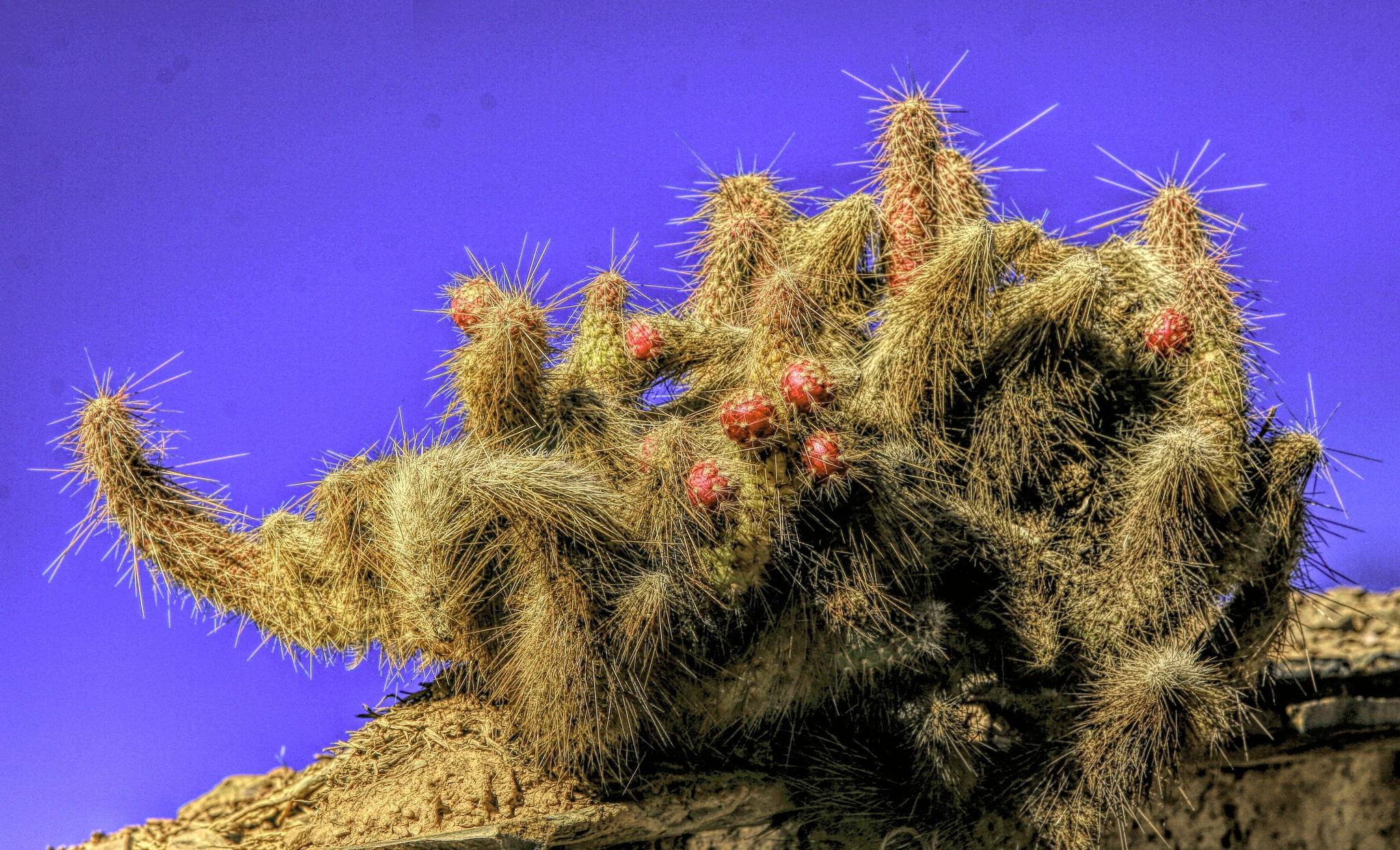 Cactus by Alberto Figueroa