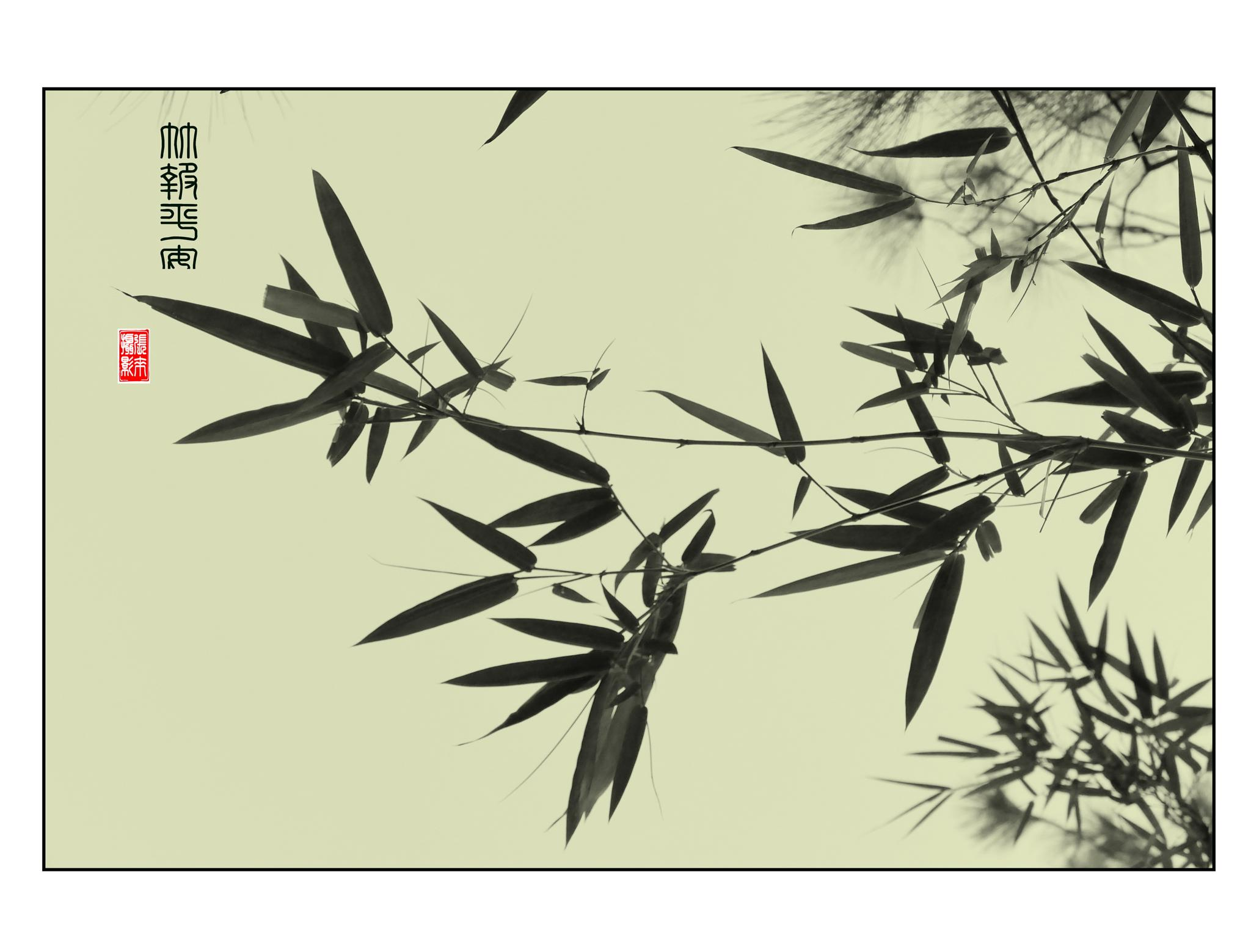 bamboo in the wind by Looi Chang