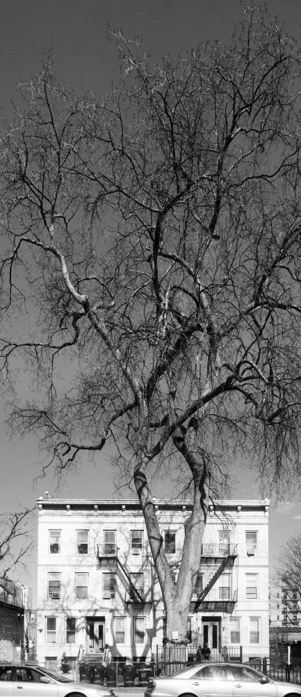 Lenox Rd / Brooklyn / Sony A7 RII / Leica 28/2.8 Elmarit-R by Neil Carpenter