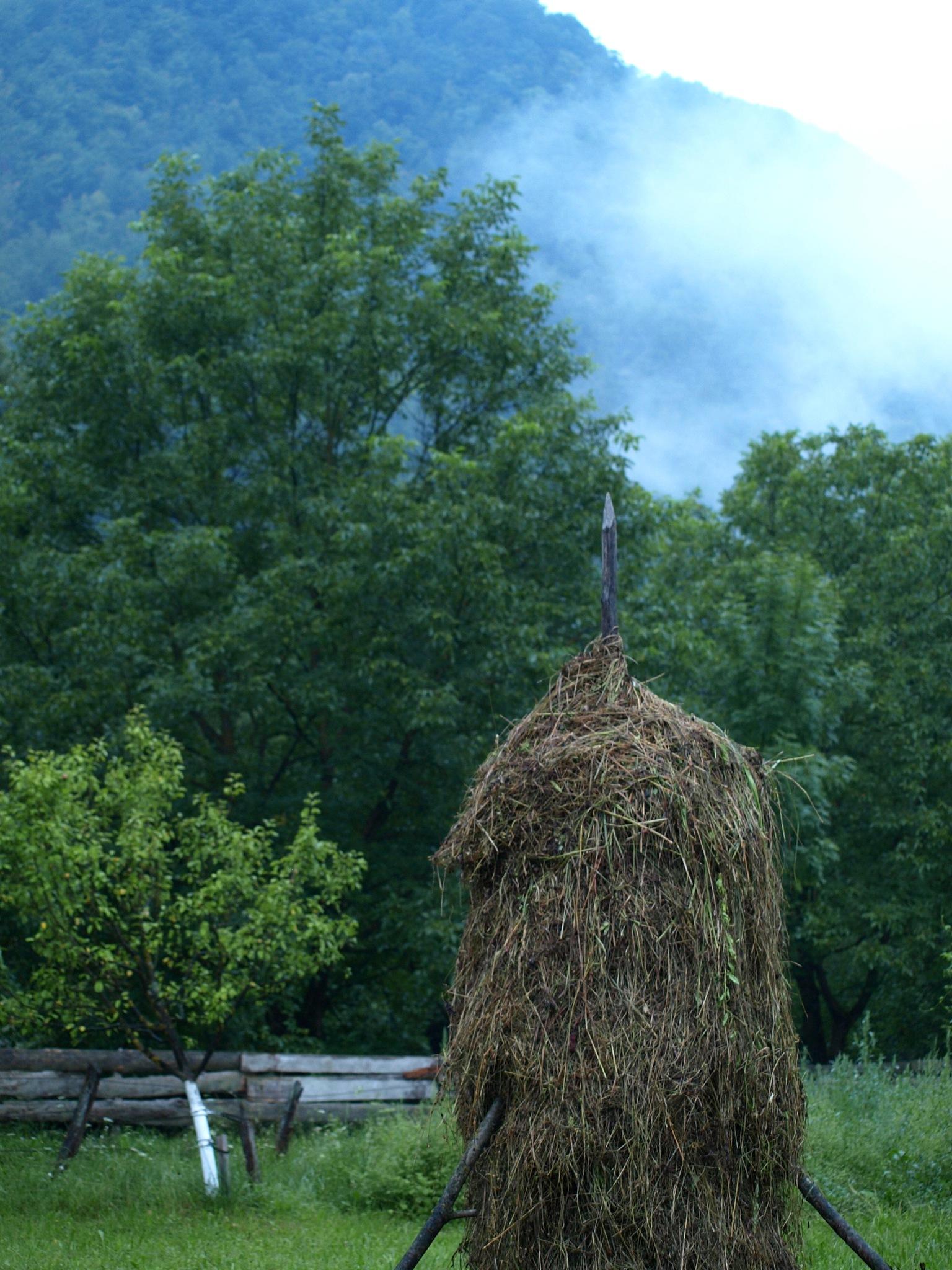 the haystack by Bogdan Tanase