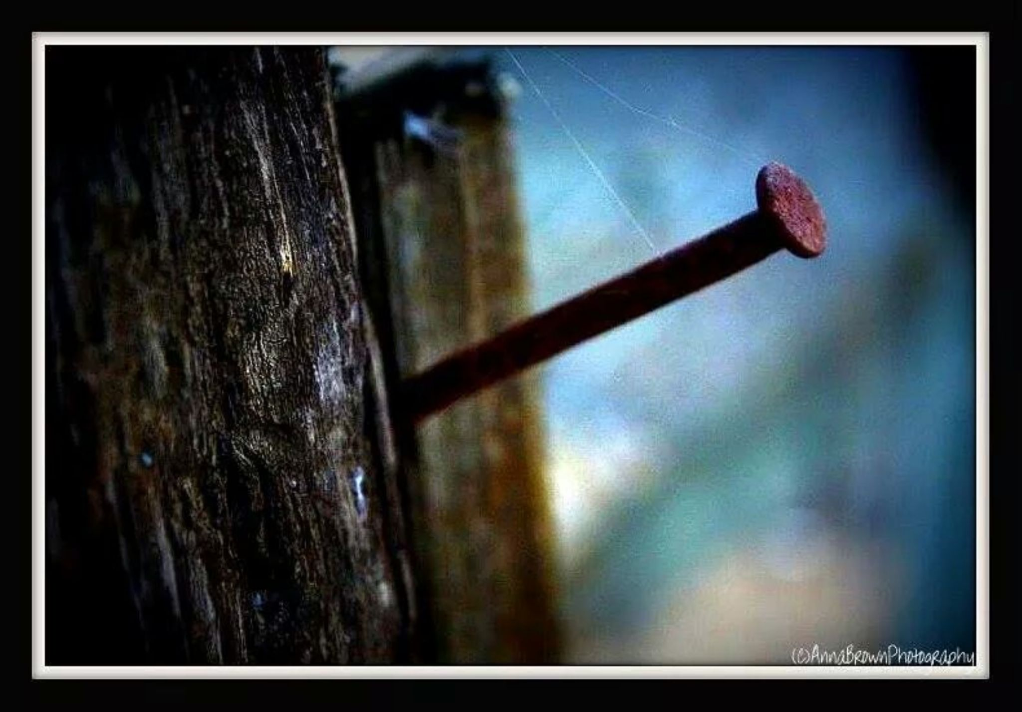 Nailed it!! by Anna Heaslett-Photography
