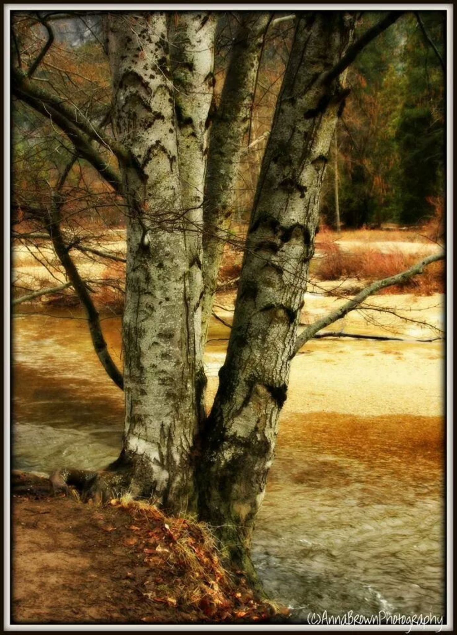 Creekside view by Anna Heaslett-Photography