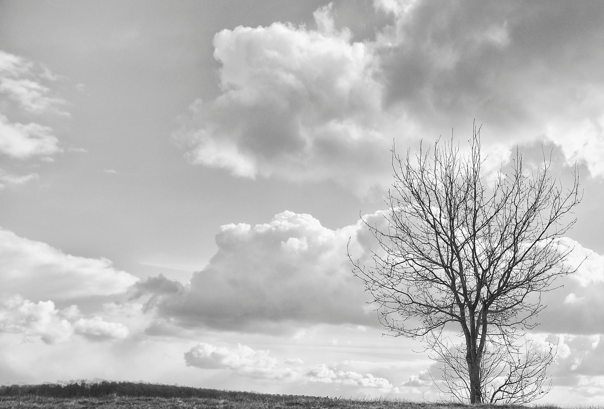 Tree by Neill PhotoArt