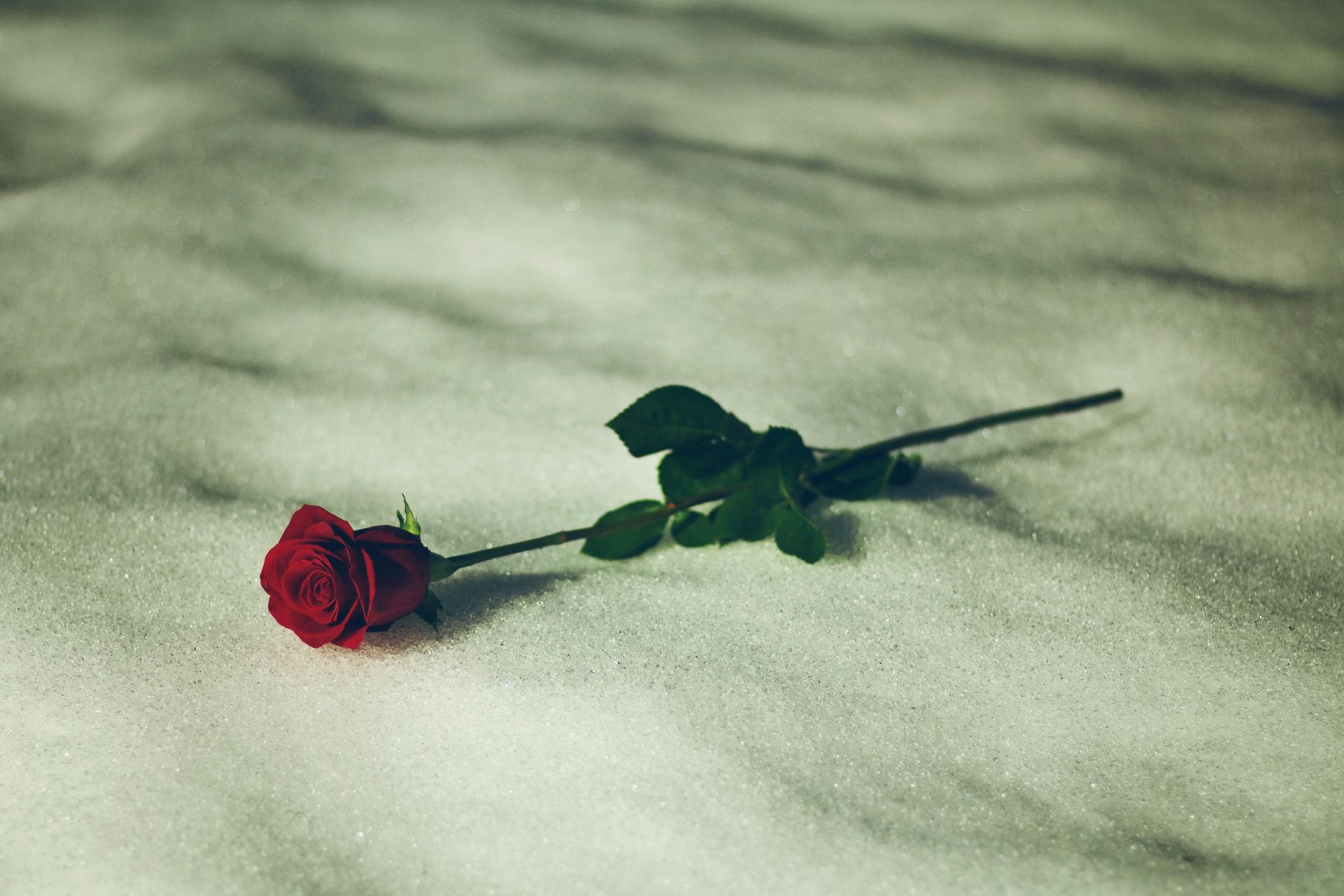 Fallen Love by Jesse LaMora