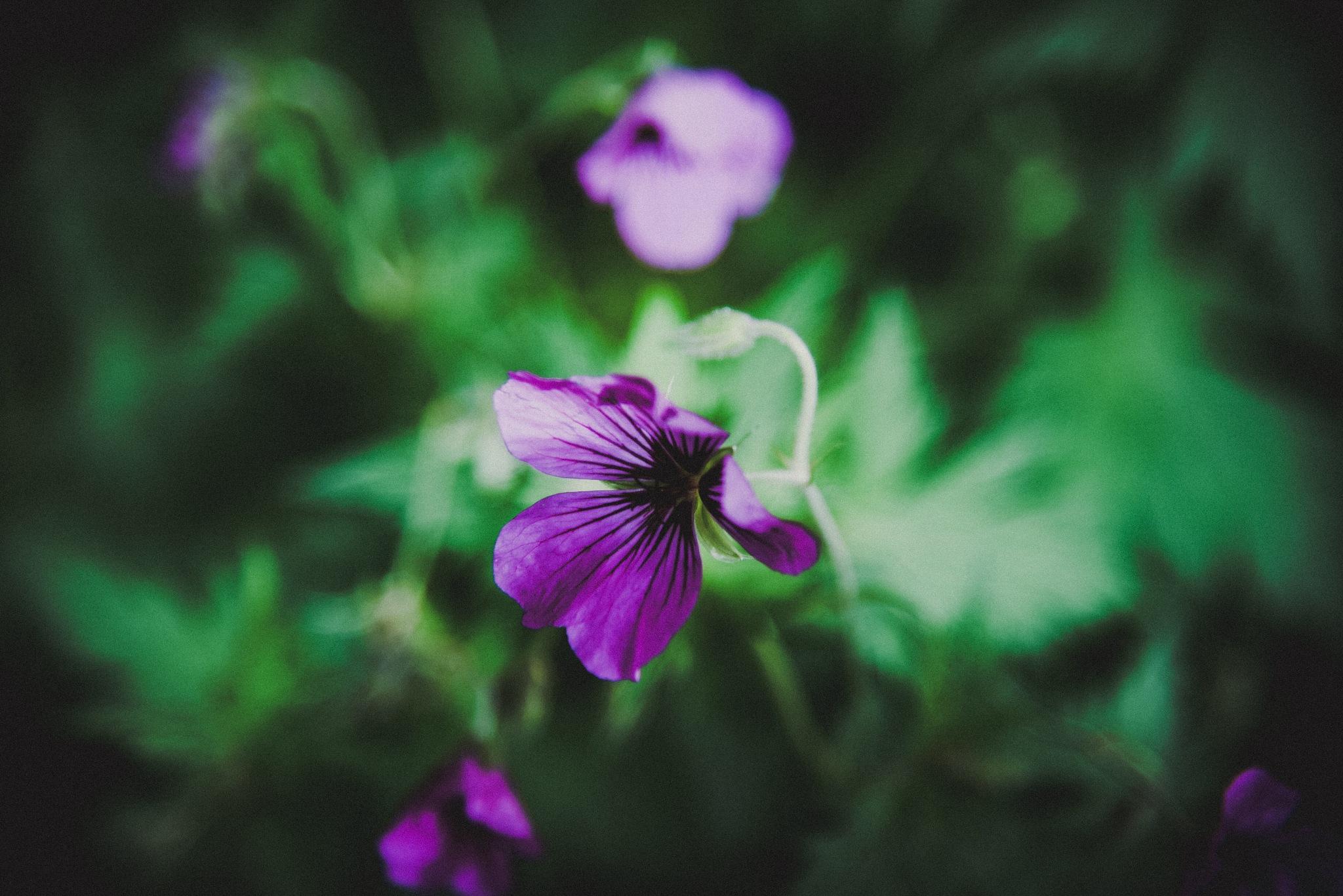 Spring flower dreaming  by Julie Johnson