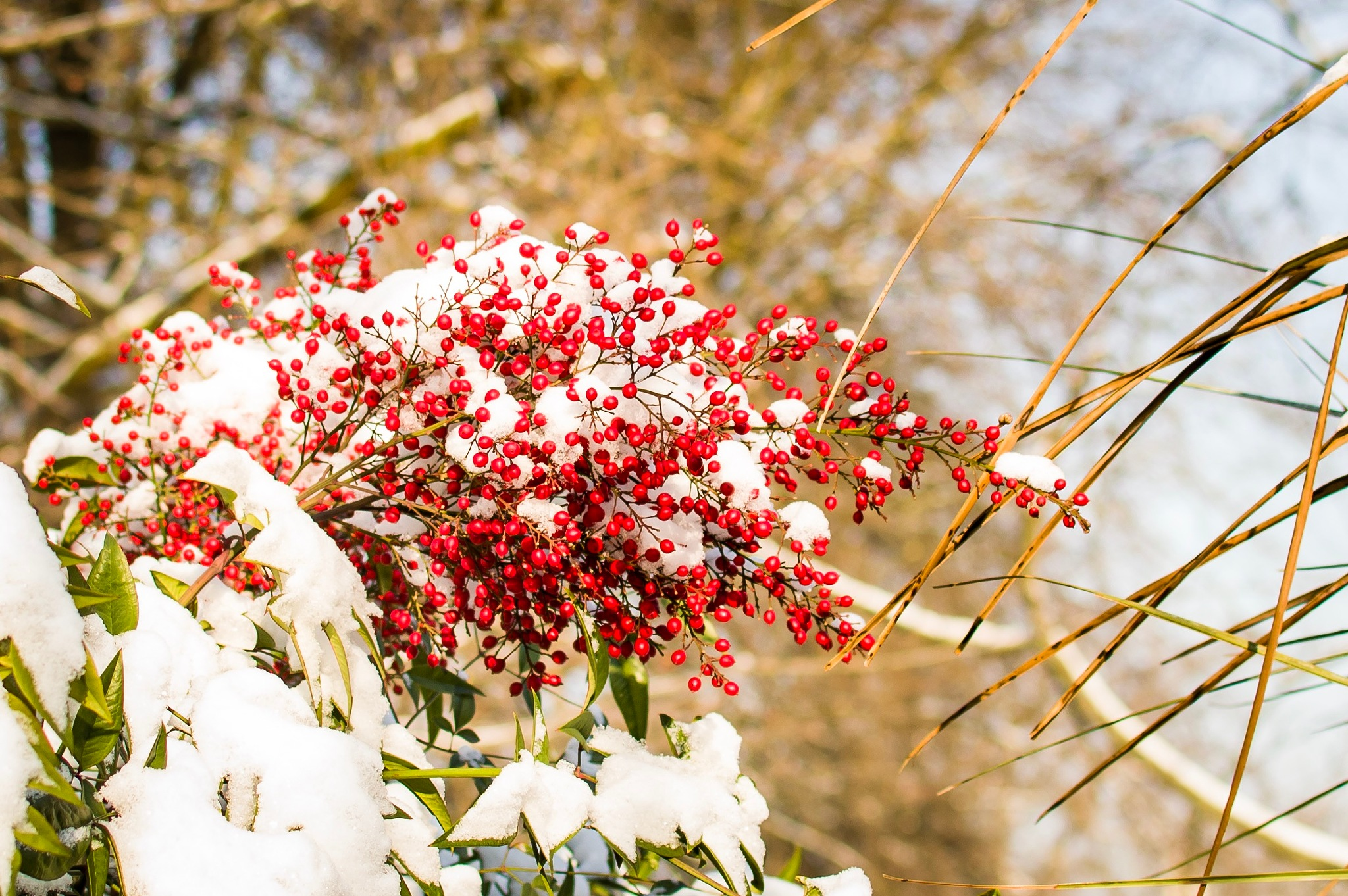 Snow on red by tatyanapetkovag4