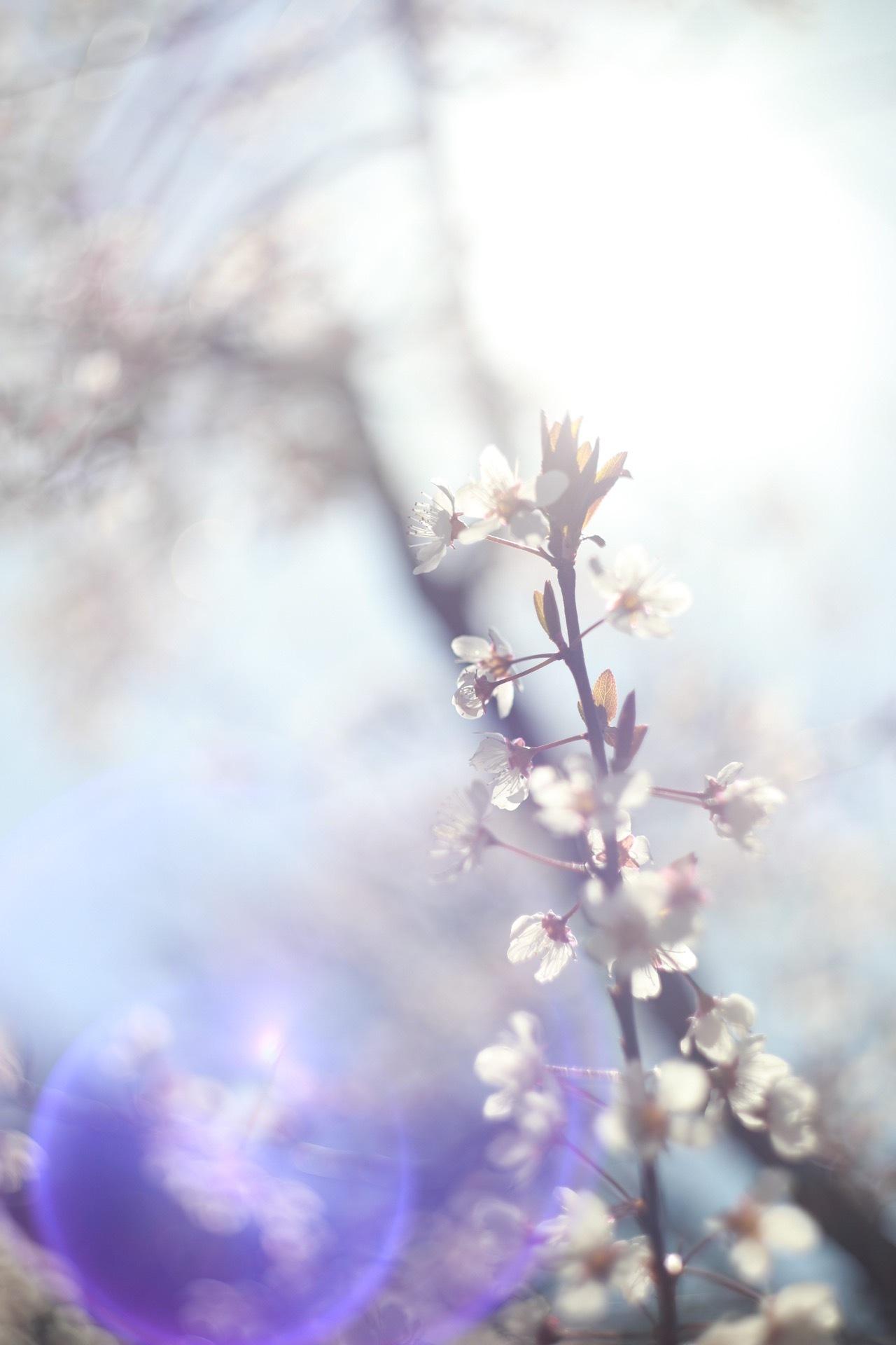 Spring come by Hidekazu Shitagami