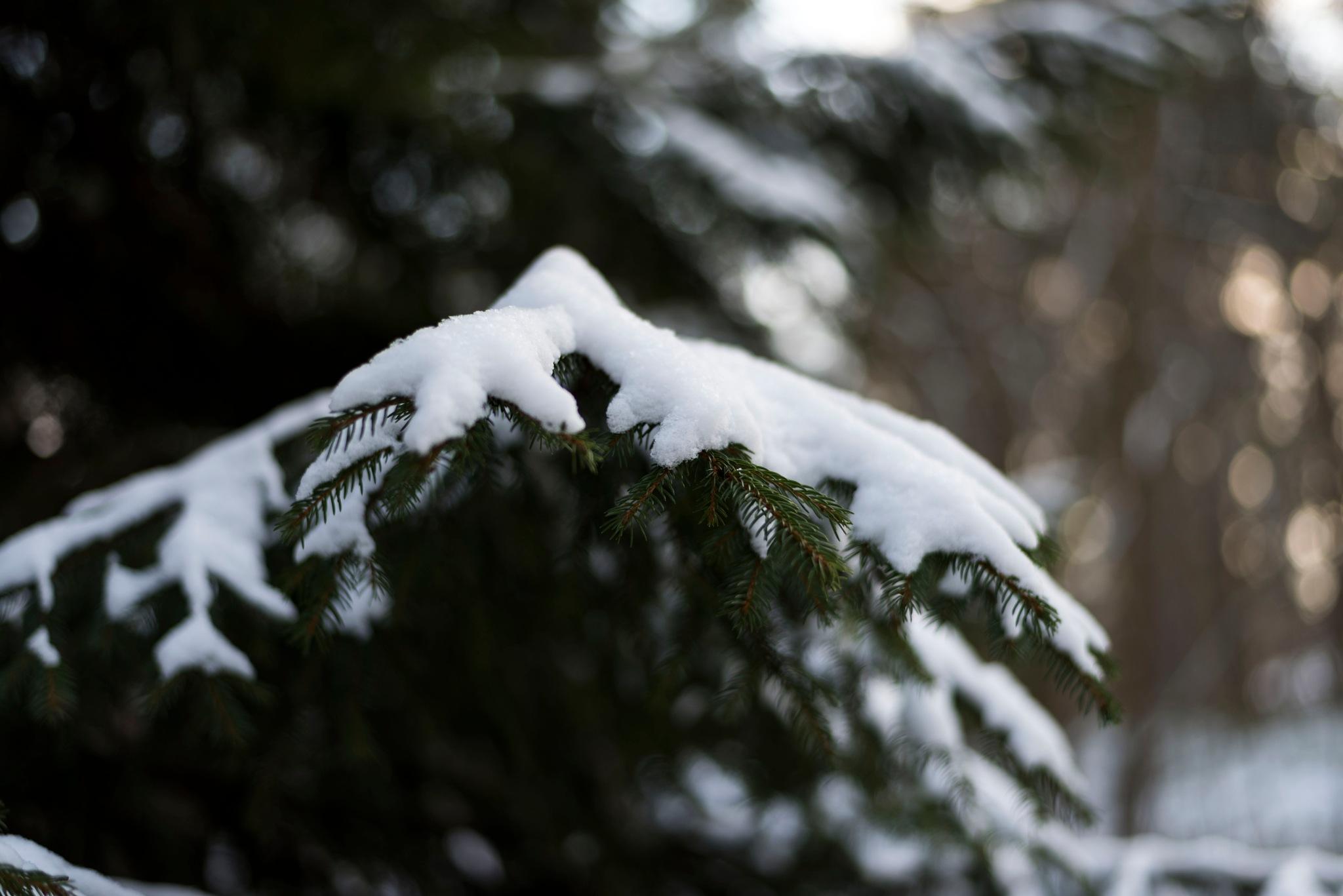 Winter. by Ioana Cristina Batrancea