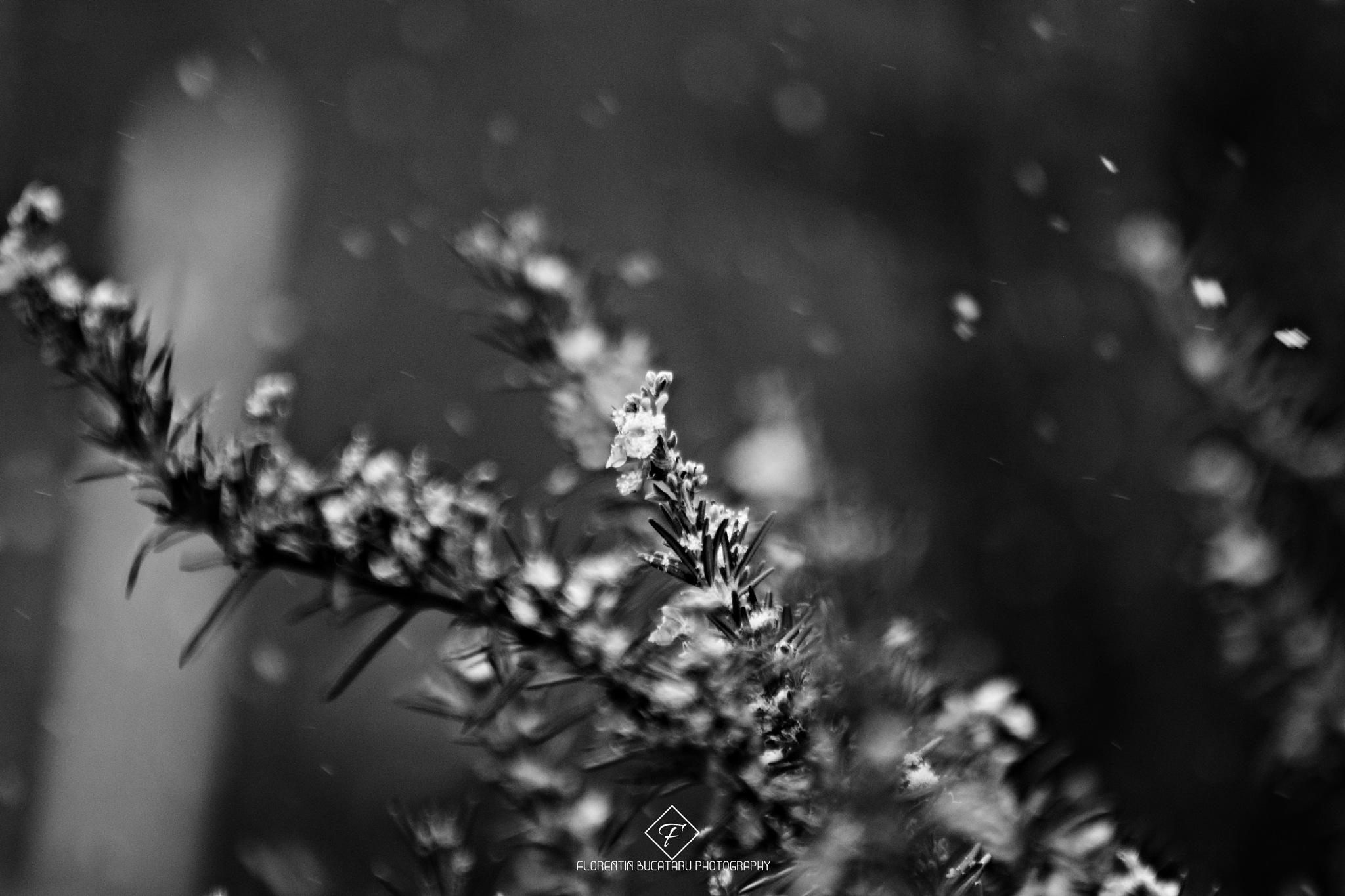 Falling snow by Florentin Bucataru