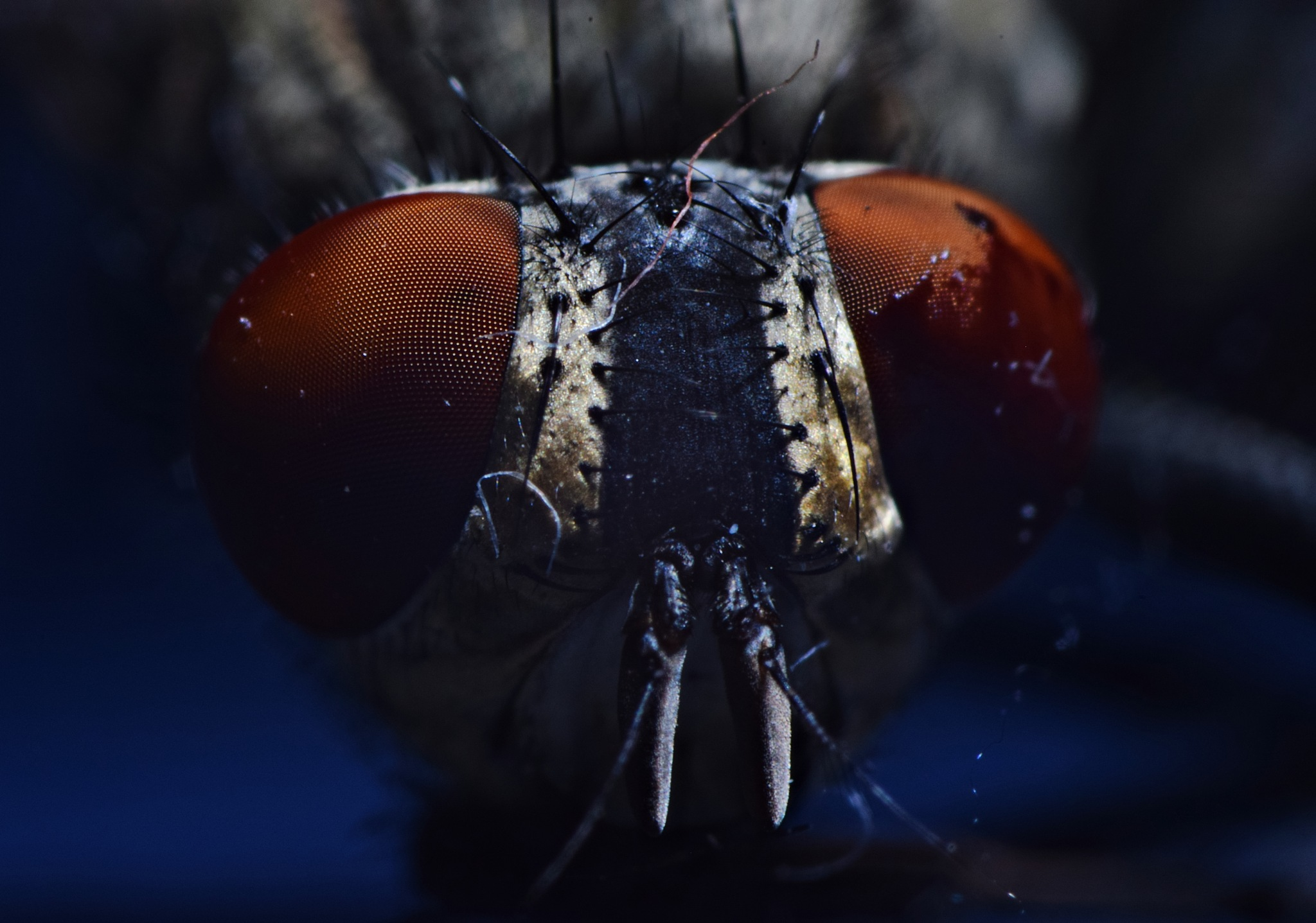 Fly by Florentin Bucataru
